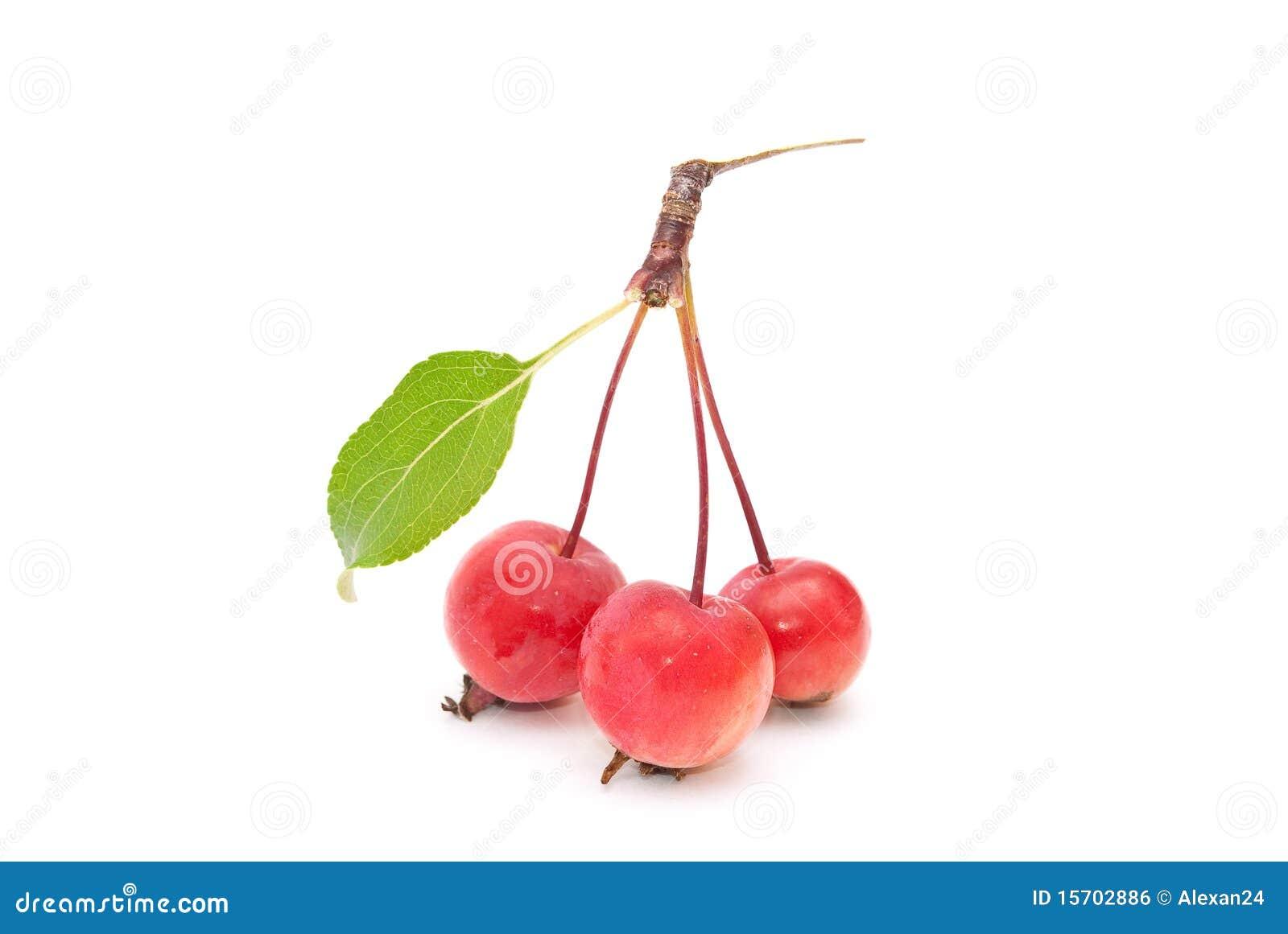 Super Kleine Äpfel stockfoto. Bild von gesund, apfel, sommer - 15702886 &EE_33