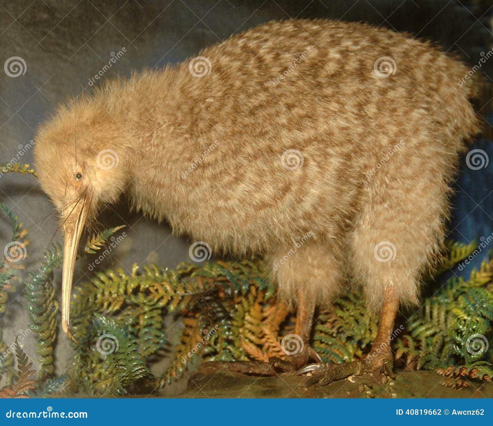 Kleine beschmutzte Kiwi