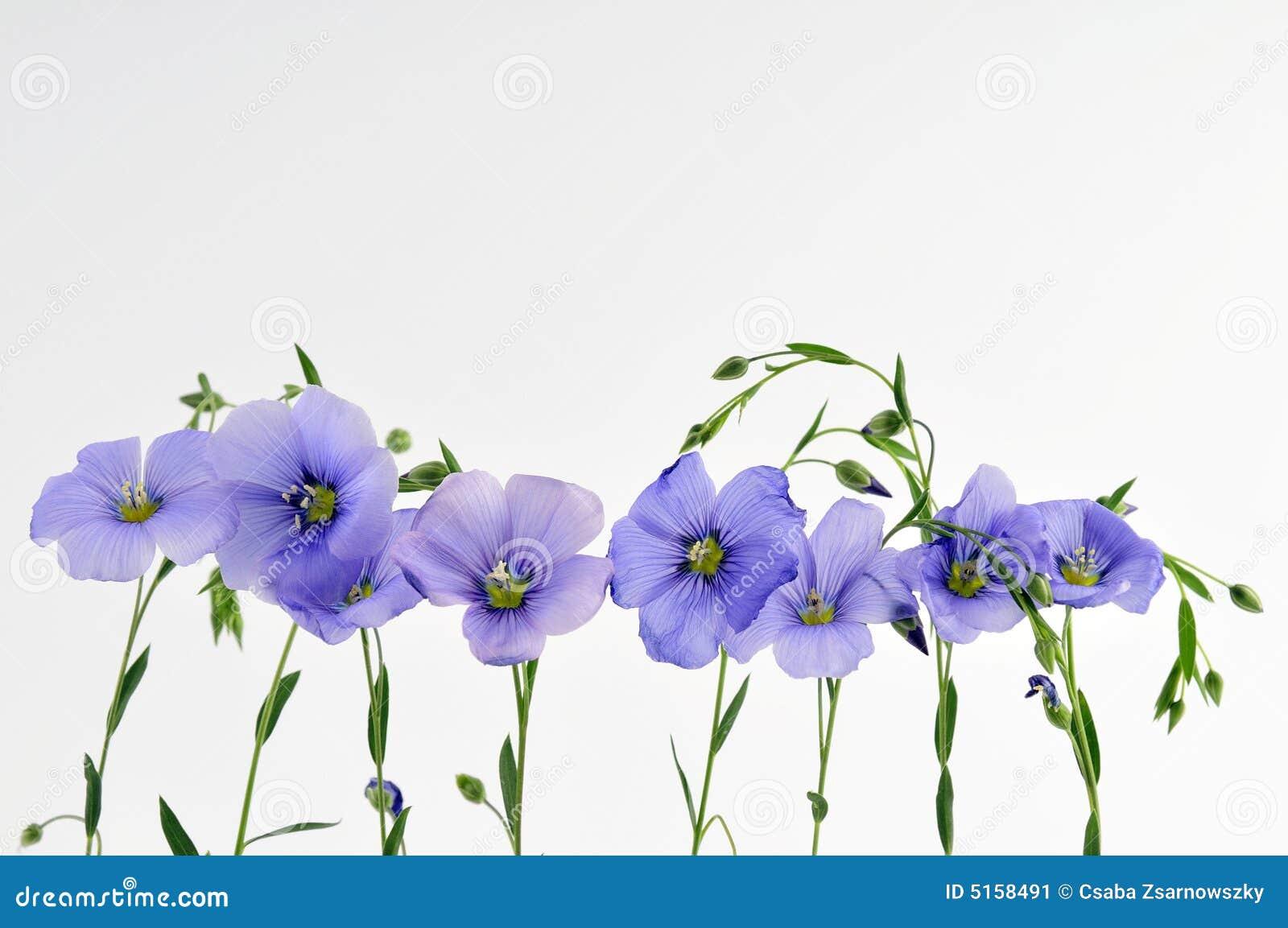 Kleine blauwe bloemen stock afbeelding afbeelding for Kleine fliegen blumen