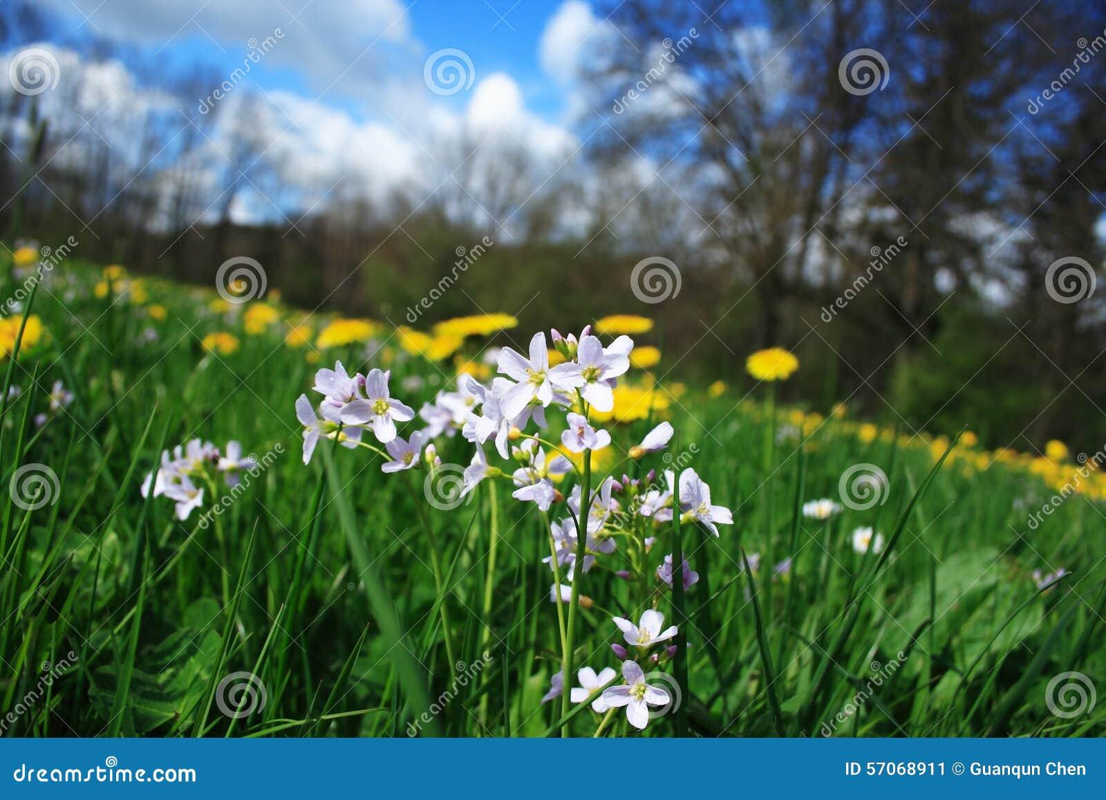 Kleine bloem in het meest forrest