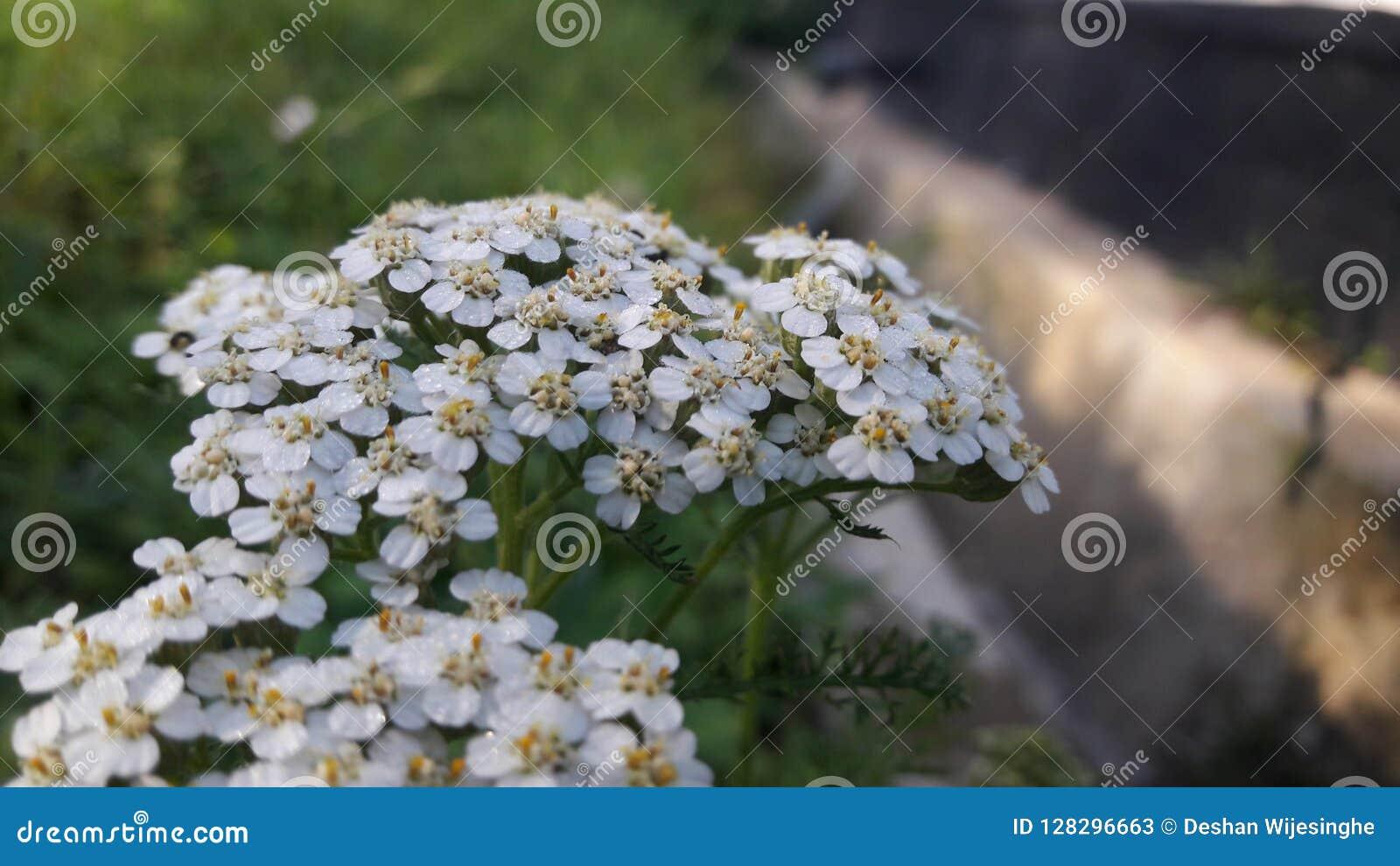 Kleine Blumen in den weißen Blumenblättern