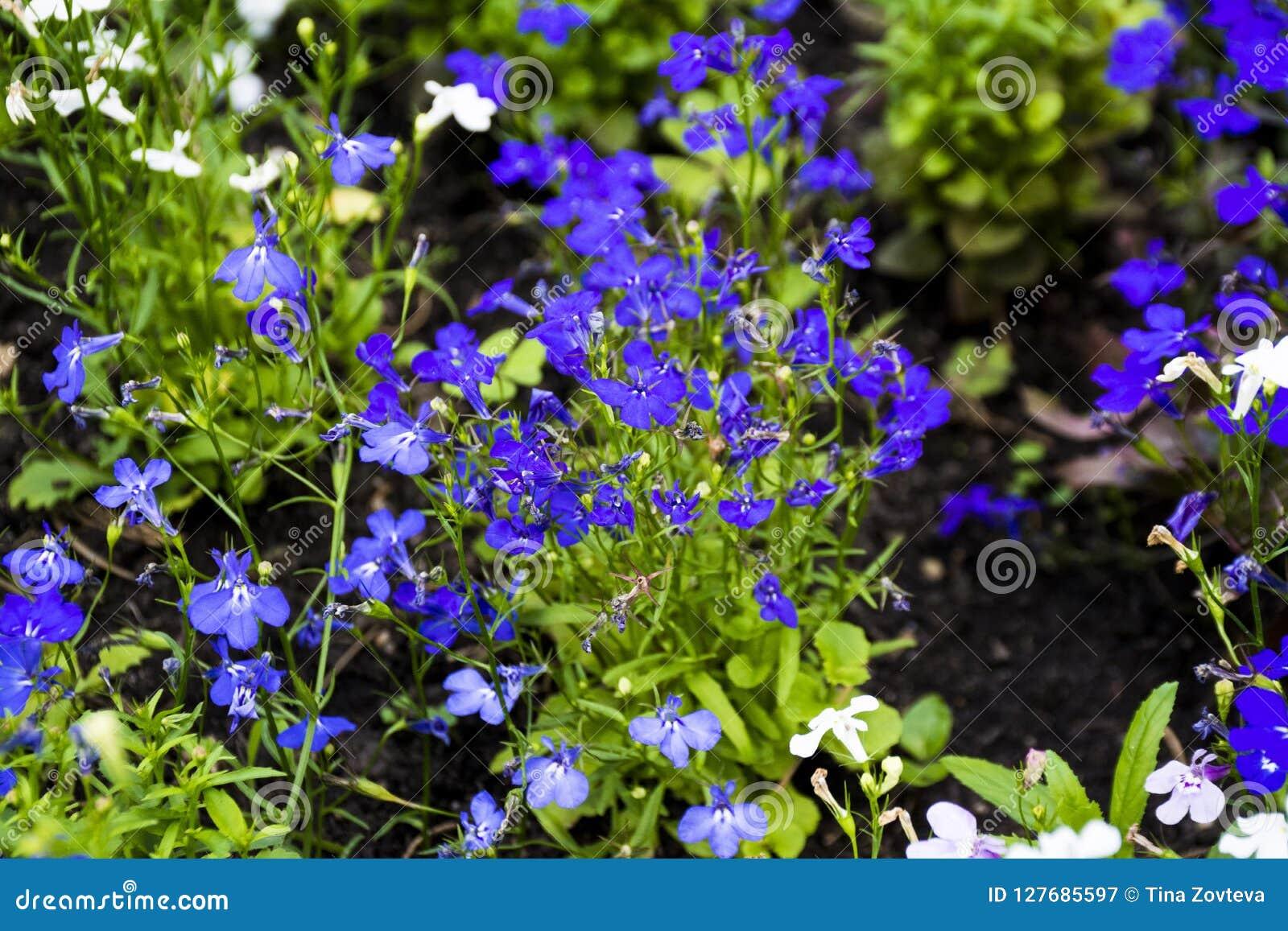 Kleine bunte wilde Blumen im Wald