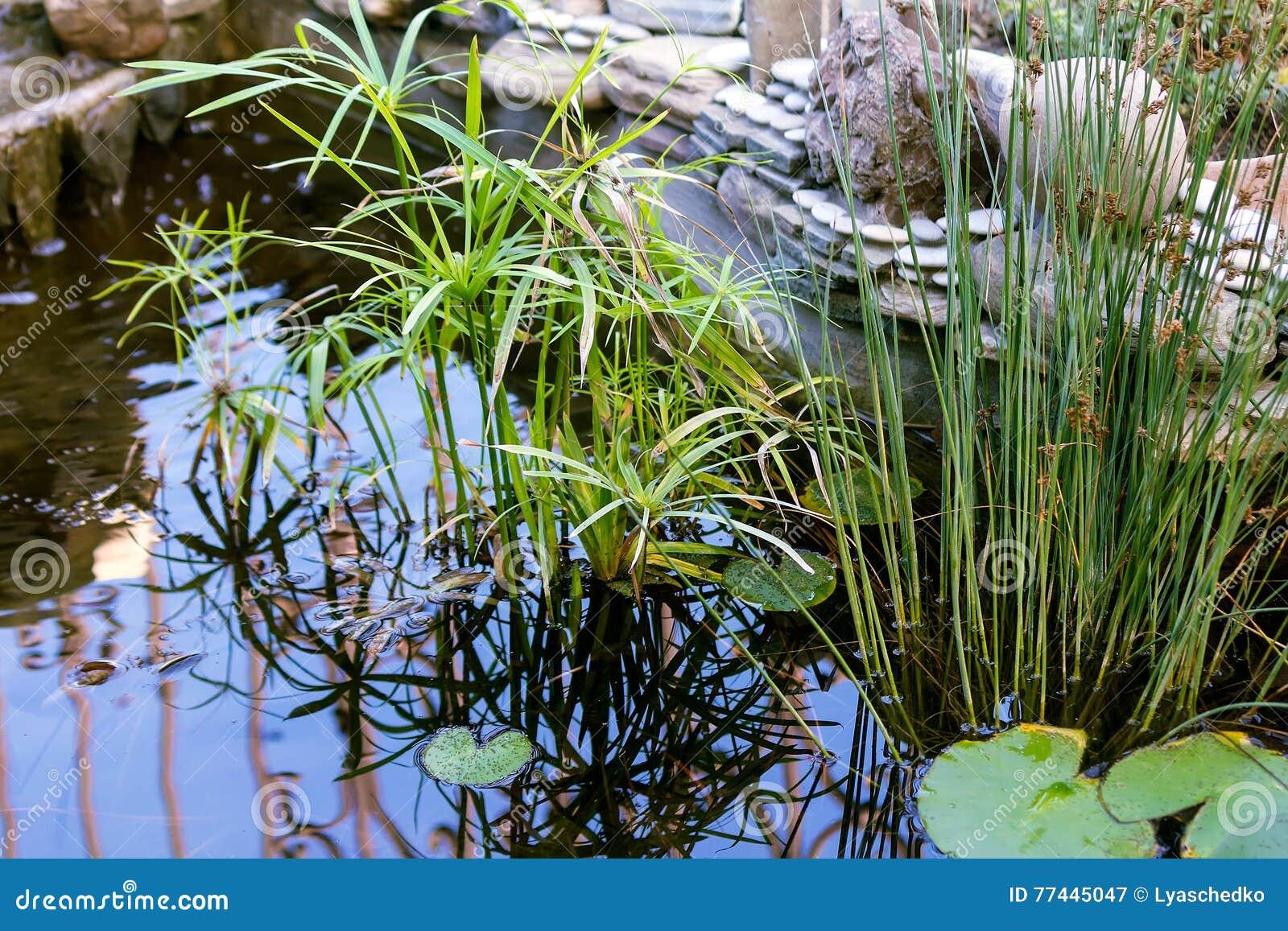 Stenen Muur Tuin : Kleine decoratieve vijver in de tuin stock afbeelding afbeelding