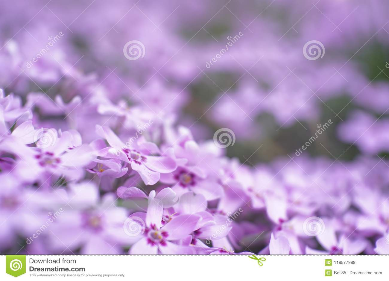 Kleine die tuin met lichtpaarse bloem macrowereld wordt gevuld