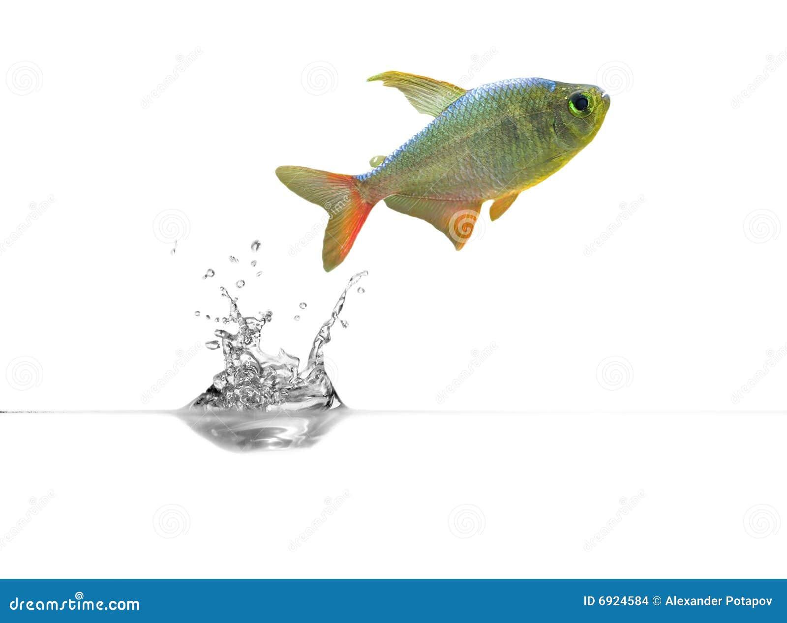Kleine fische ber transparentem wasser stockbilder bild for Kleine fische