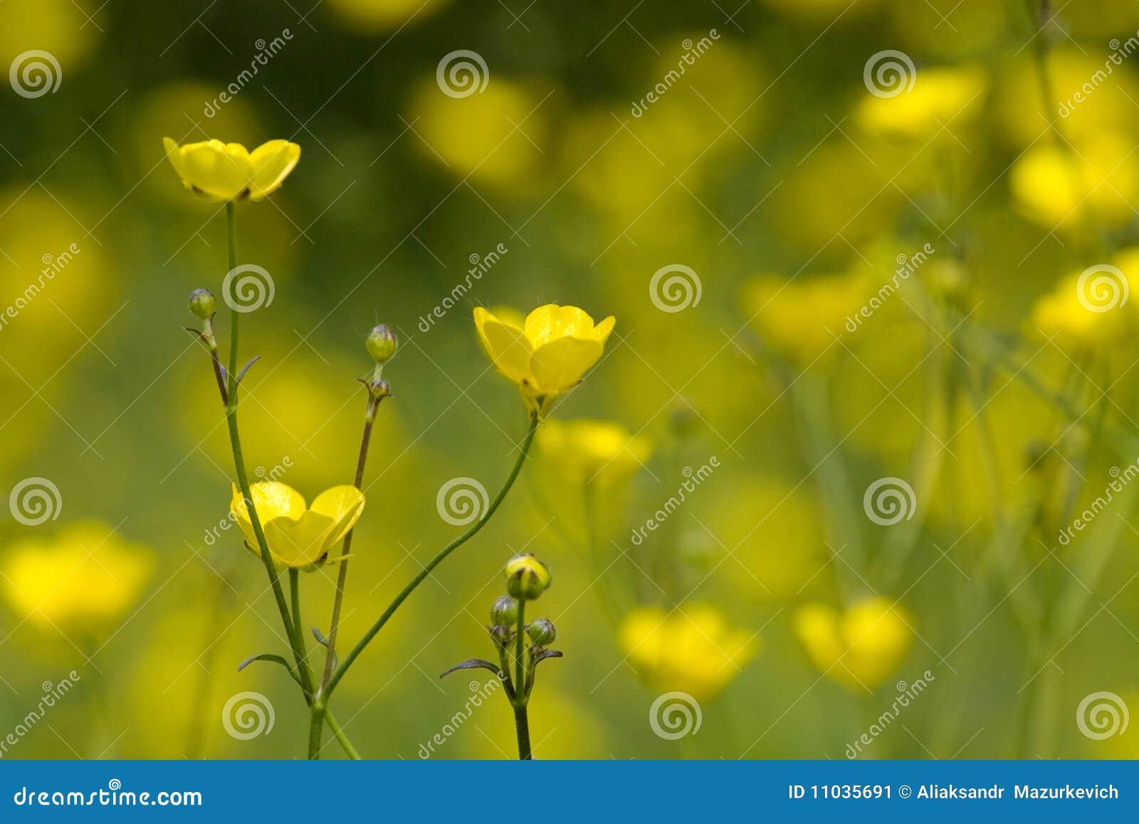kleine gelbe blumen stockbild bild 11035691. Black Bedroom Furniture Sets. Home Design Ideas