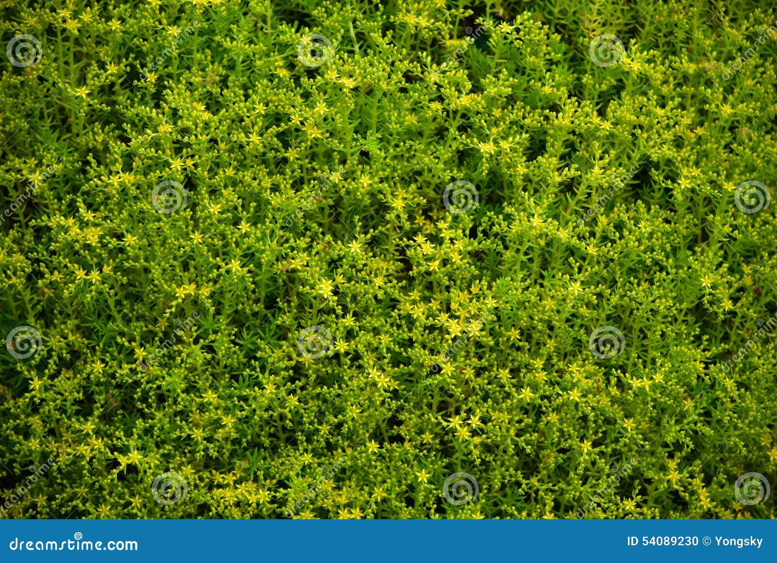 Kleine gele bloemen