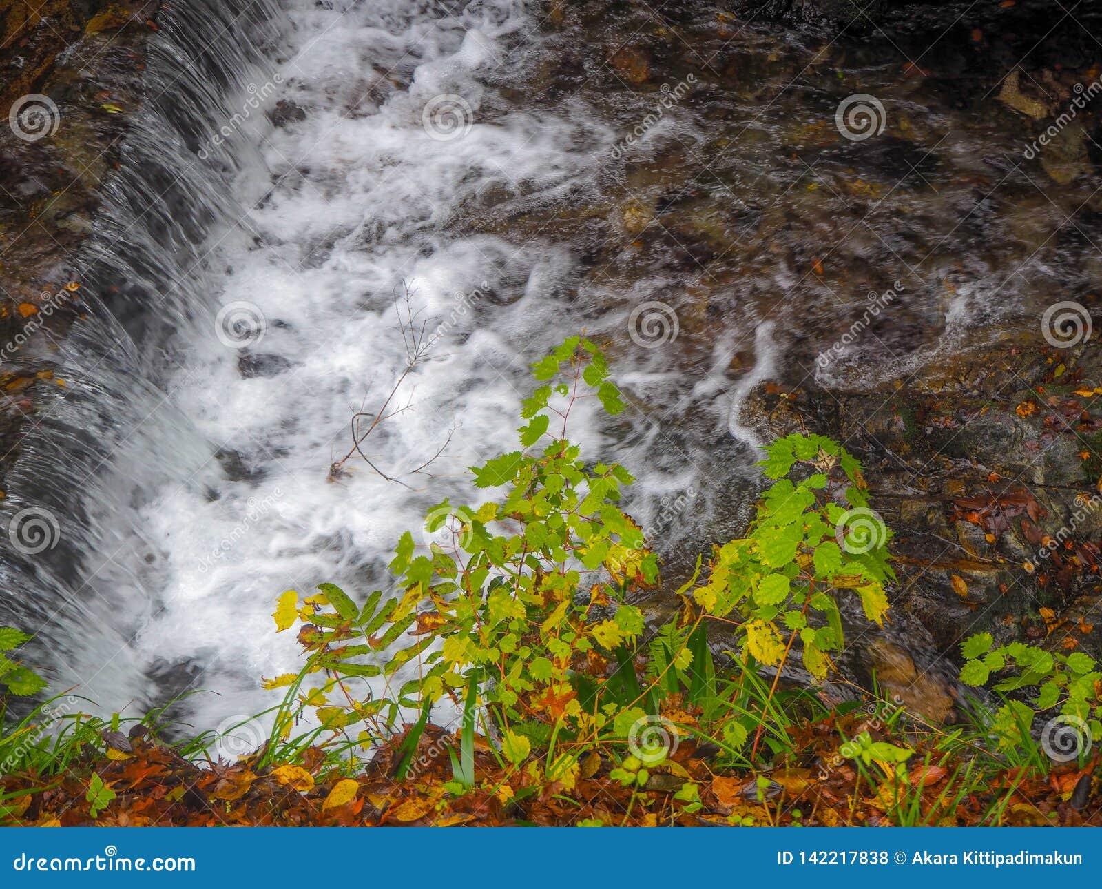Kleine grüne Bäume neben einem kleinen Wasserfall