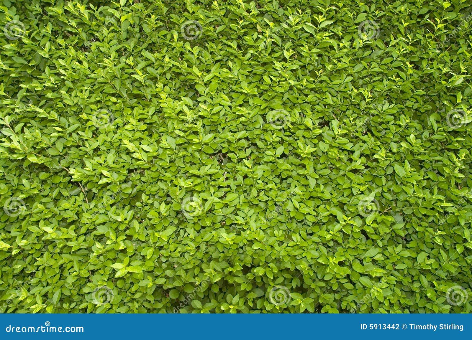 Kleine Groene Bladeren Stock Fotografie - Afbeelding: 5913442: nl.dreamstime.com/stock-fotografie-kleine-groene-bladeren-image5913442