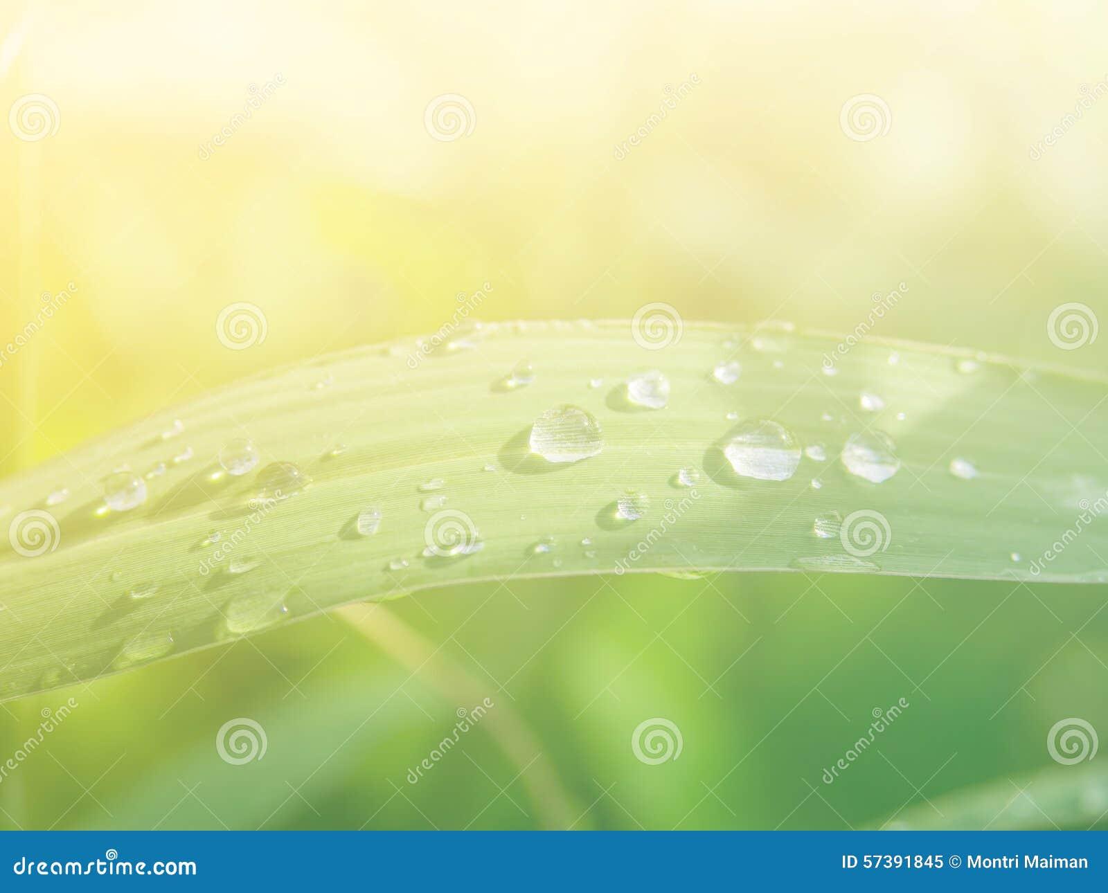 Kleine groep regendruppels op grasinstallaties na een regen