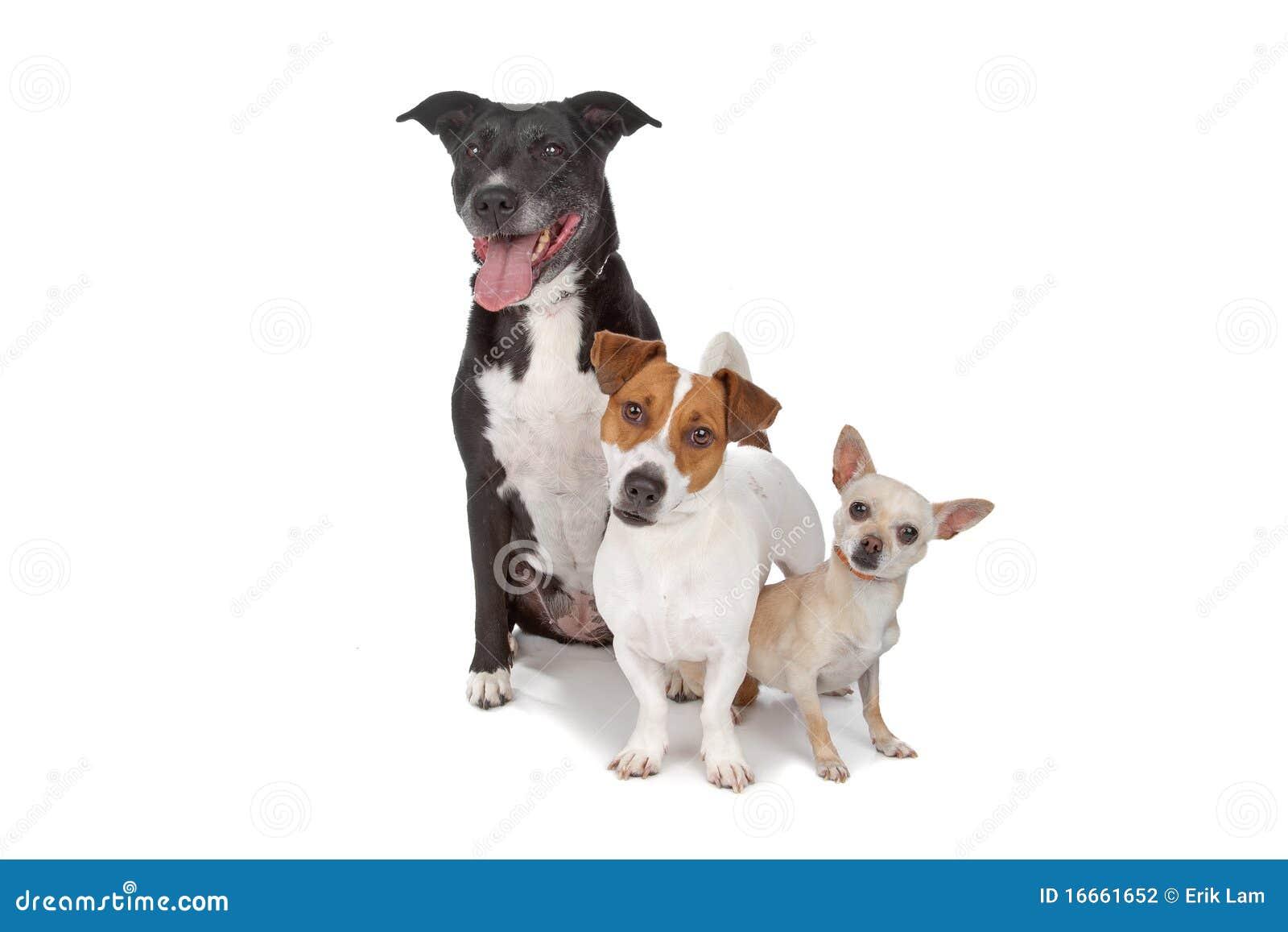 Kleine Gruppe Hunde