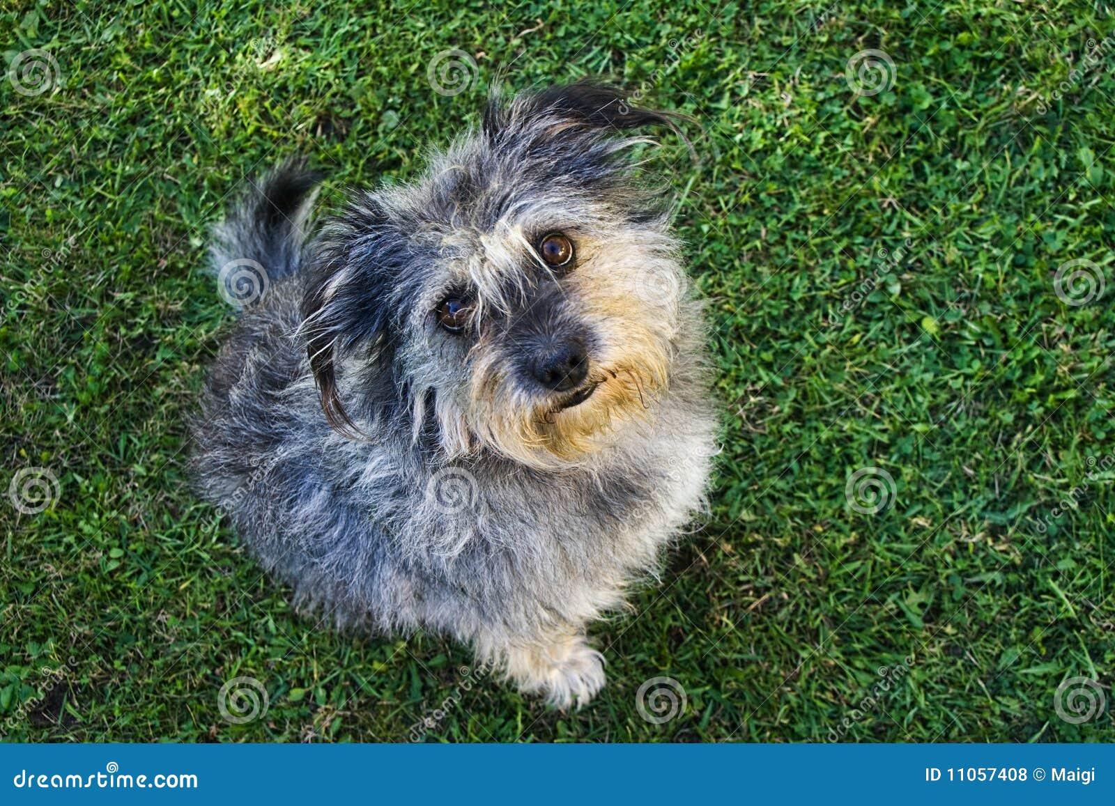 Kleine hond royalty vrije stock foto 39 s beeld 11057408 - Ontwikkel een kleine huisinvoer ...