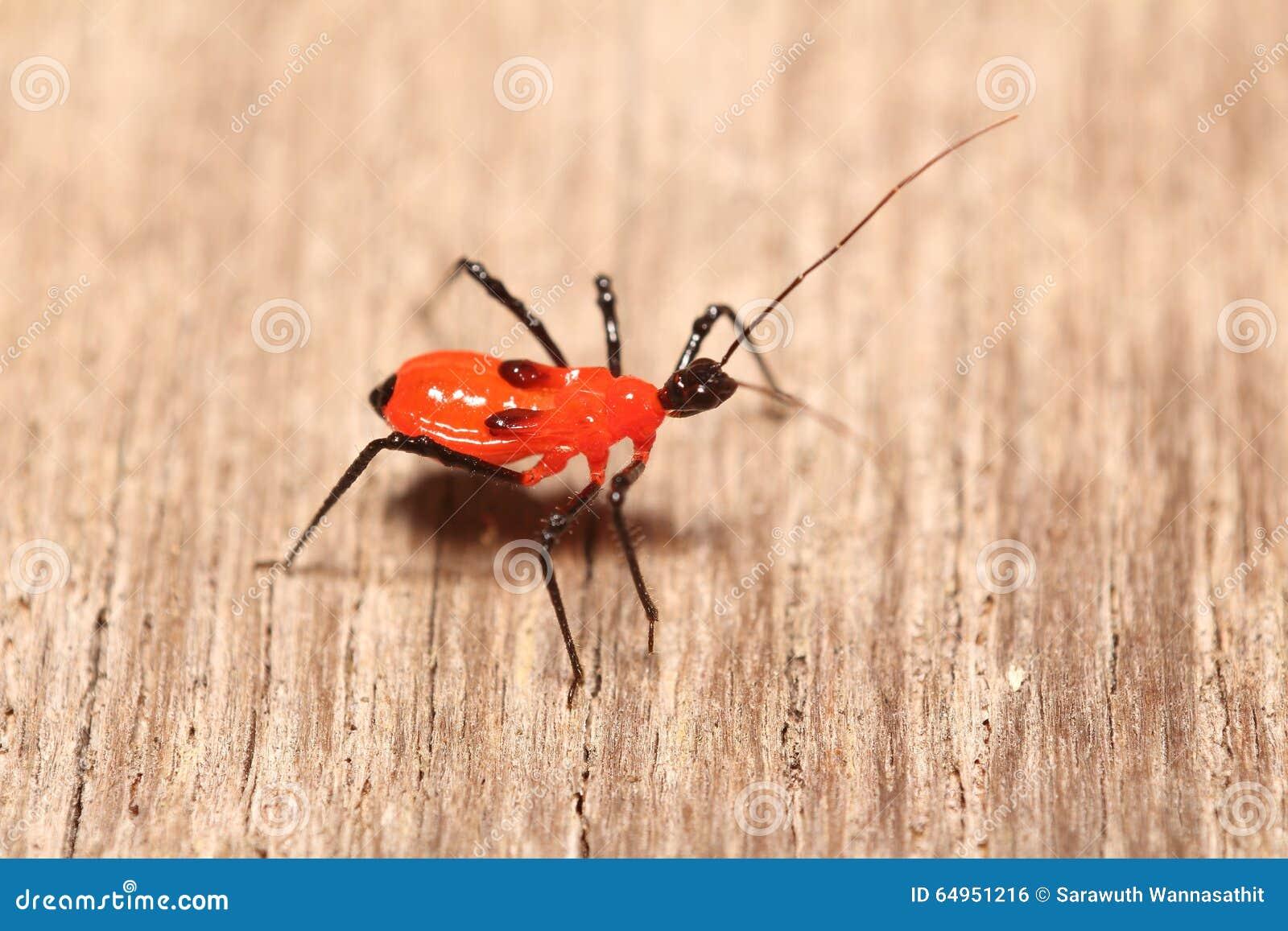 kleine insekten im garten stockfoto bild 64951216. Black Bedroom Furniture Sets. Home Design Ideas