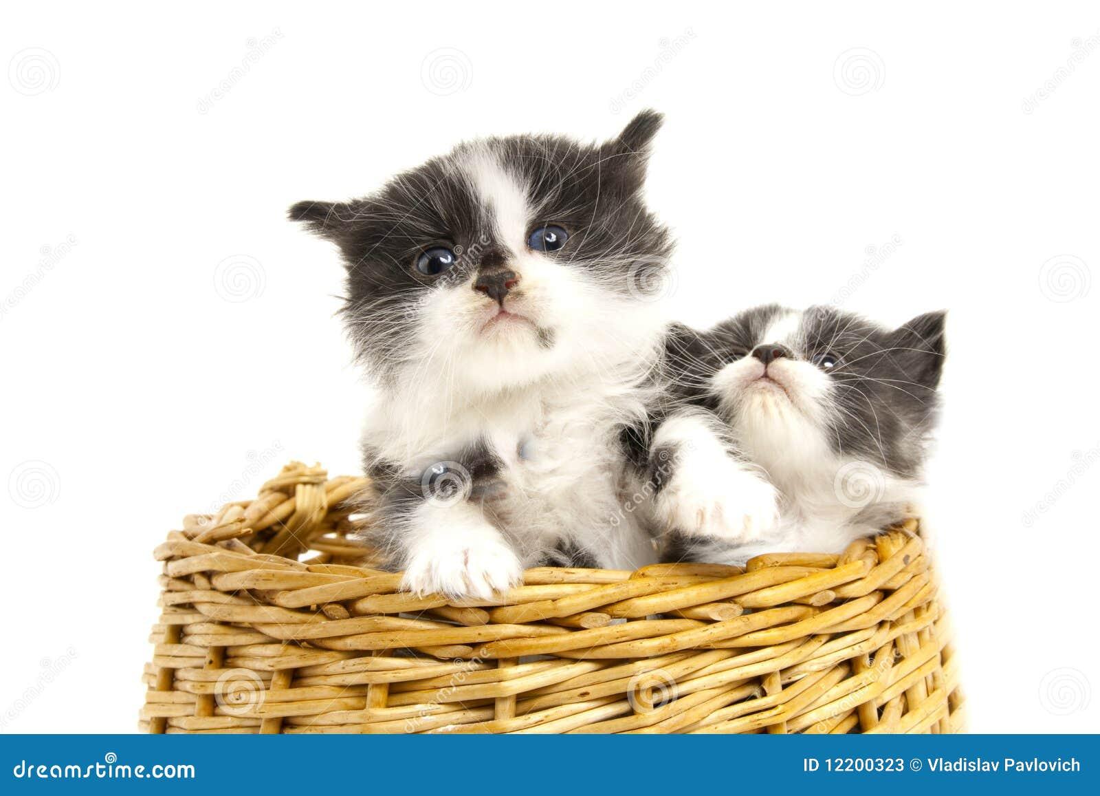 Kleine Kätzchen.