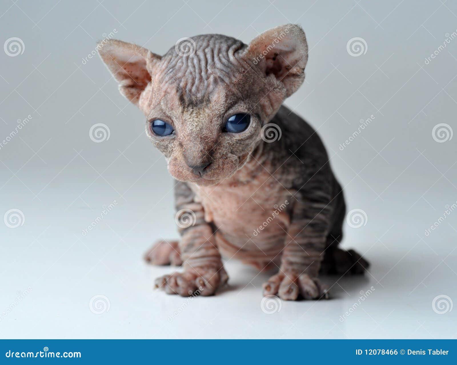 Kleine Katze Stockfoto Bild Von Hintergrund Inländisch 12078466