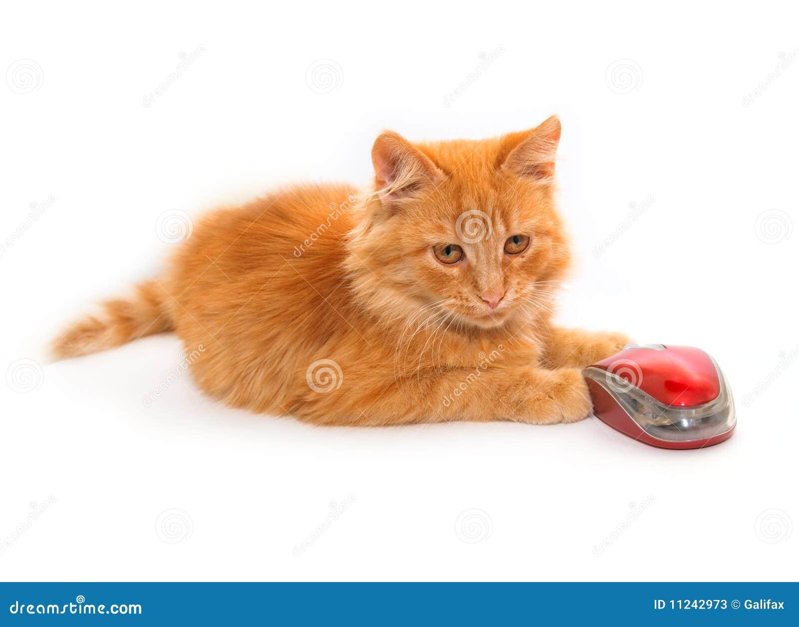 Kleine Katze mit Maus