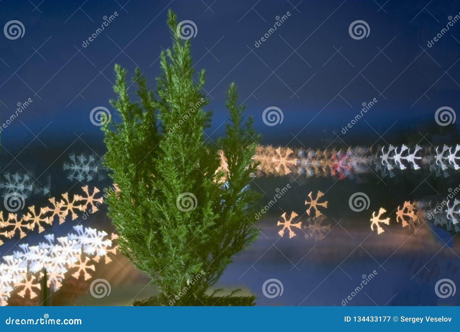 Kleine levende Kerstboom in een pot op bokehachtergrond bokeh sneeuwvlok