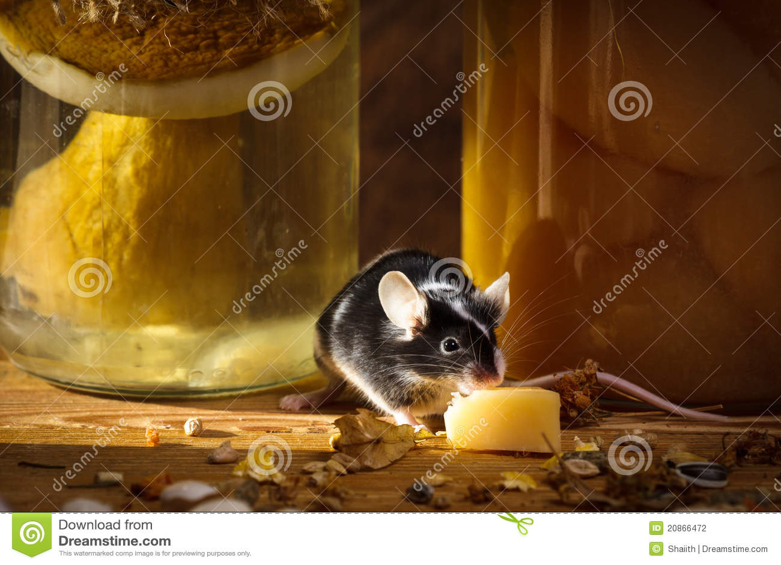 Kleine Maus Die Kase Im Keller Isst Stockfoto Bild Von