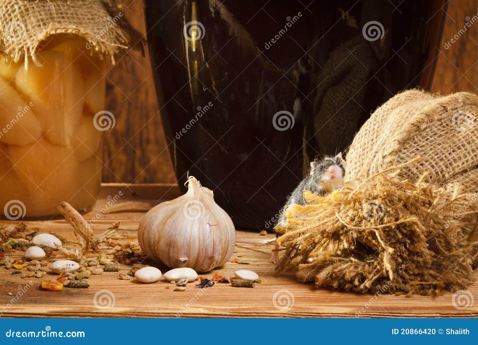 Kleine Maus Im Keller Mit Garlik Stockfoto Bild Von Blick