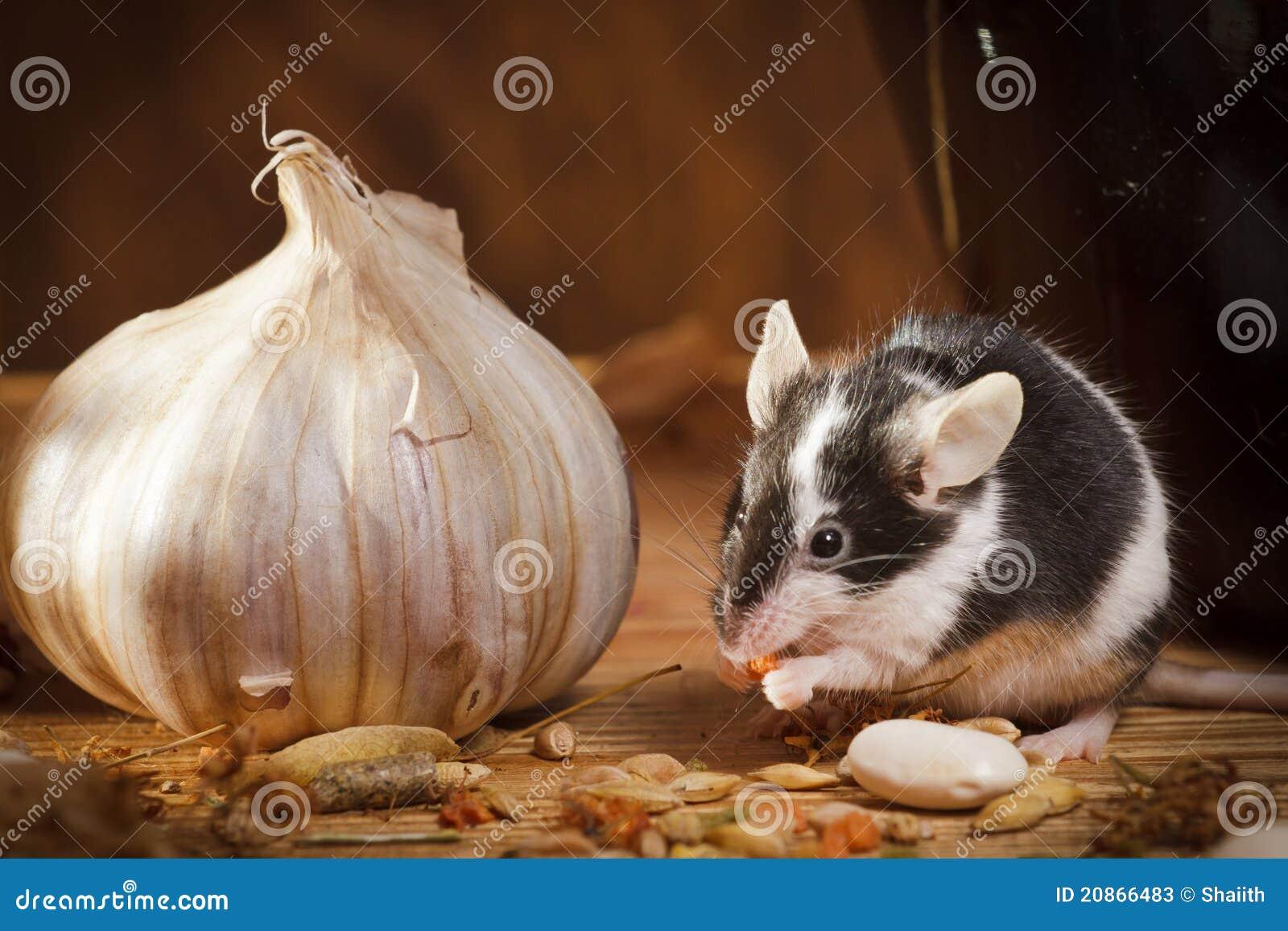 Kleine Maus Mit Knoblauch Im Keller Stockbild Bild Von