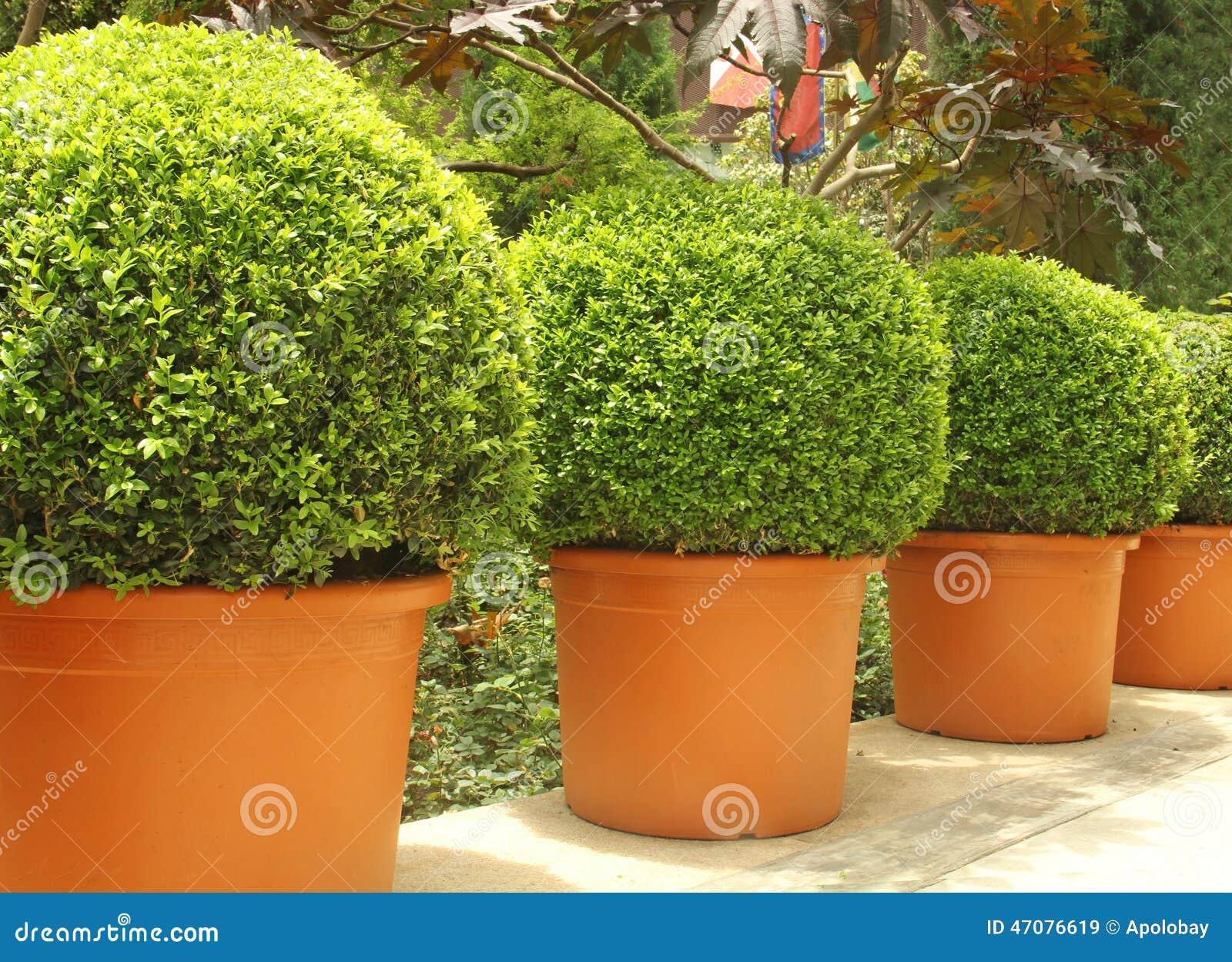 Kleine mooie bomen in potten stock foto afbeelding 47076619 What are miniature plants grown in pots called