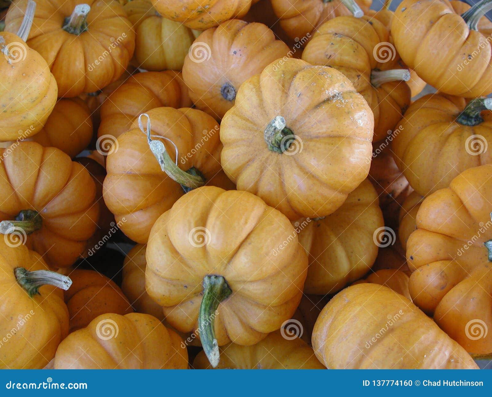 Kleine, oranje, decoratieve pompoenen in een stapel