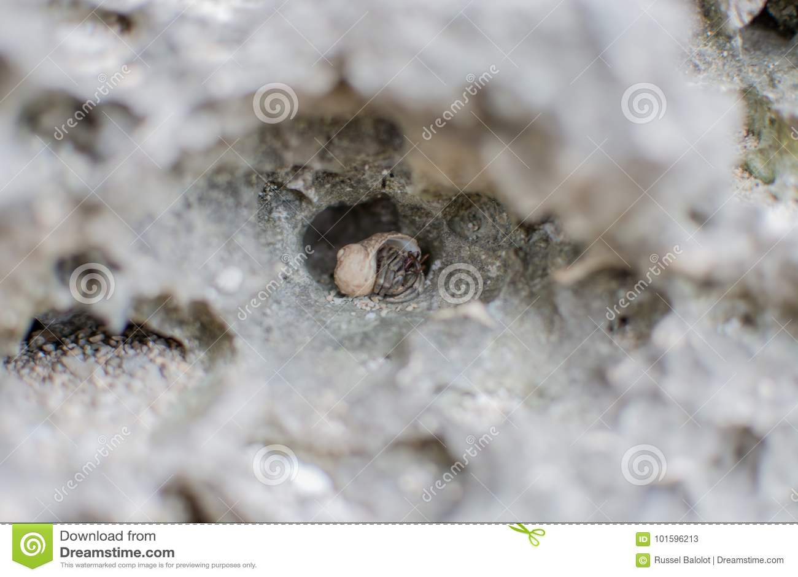 Kleine overzeese shell
