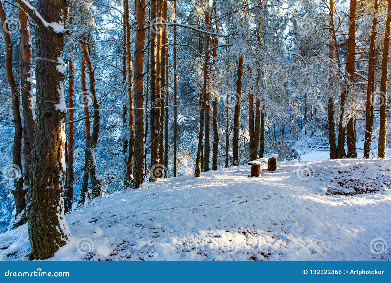 Kleine Reinigung im Kiefernwald bedeckt im Schnee Das Glänzen wird durch die gelben und orange Kreise symbolisiert