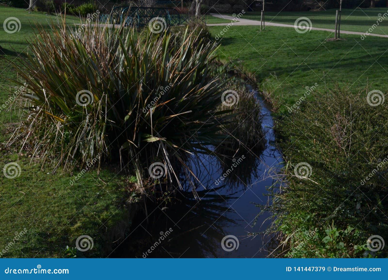 Kleine rivier in natuurlijke ecosistem