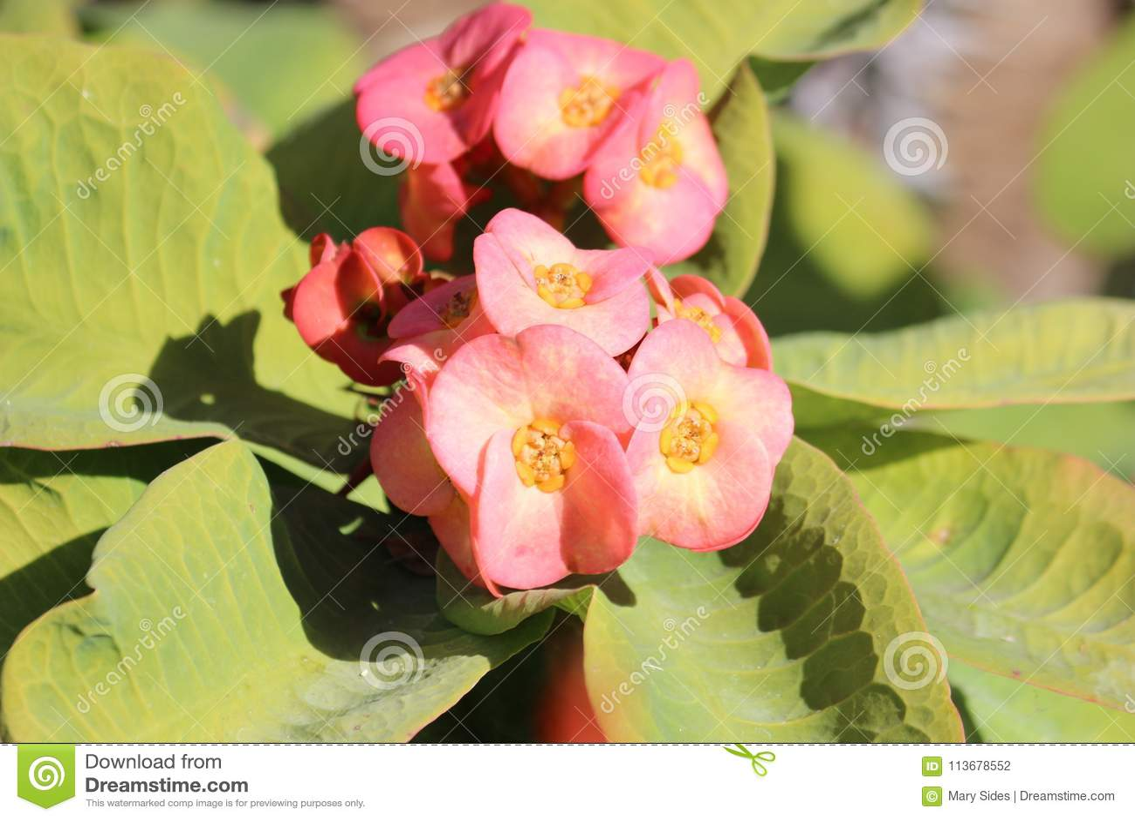 Kleine rosafarbene Blumen