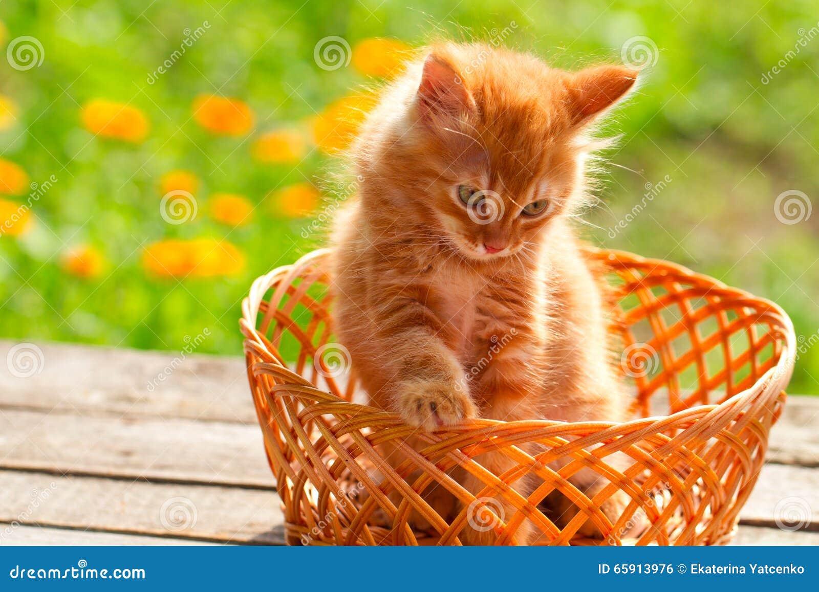 kleine rote katze in einem weidenkorb auf gr nem hintergrund drau en stockfoto bild von kitten. Black Bedroom Furniture Sets. Home Design Ideas