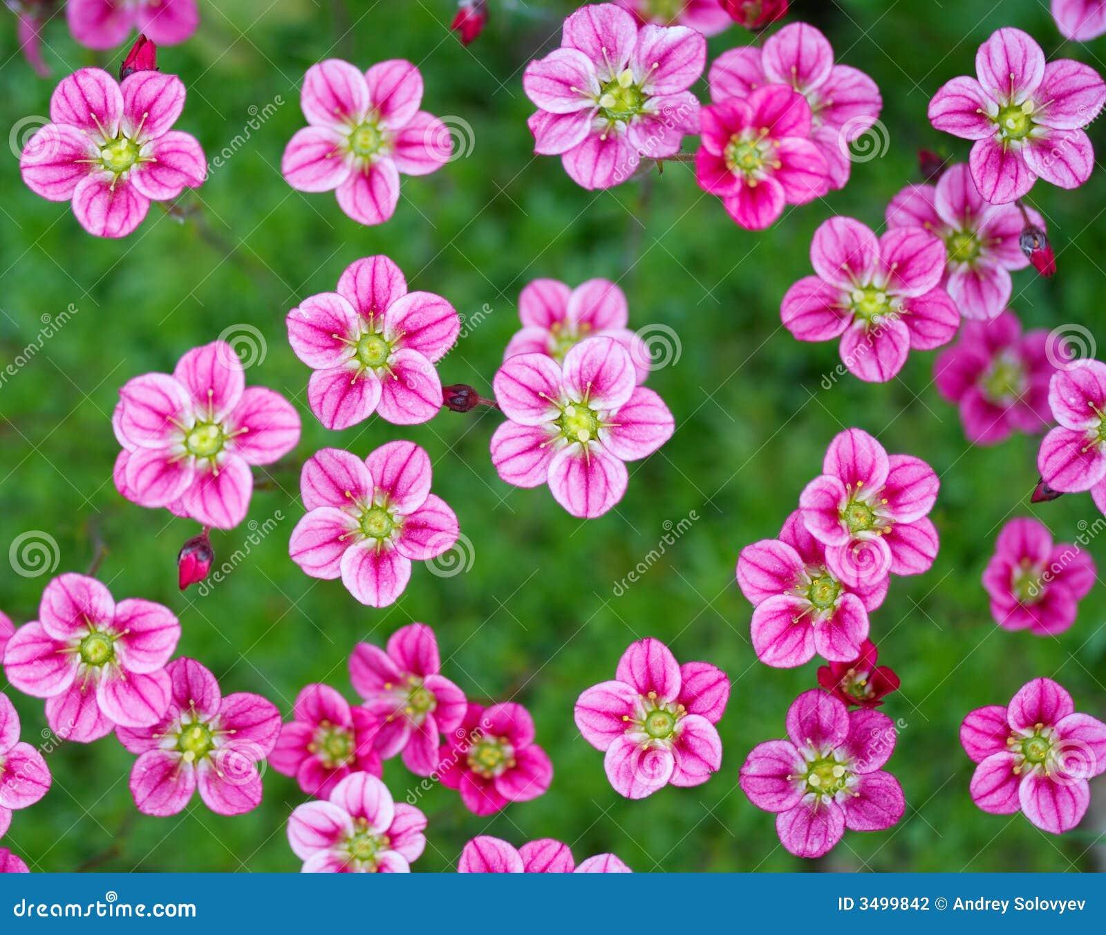 Kleine roze bloemen