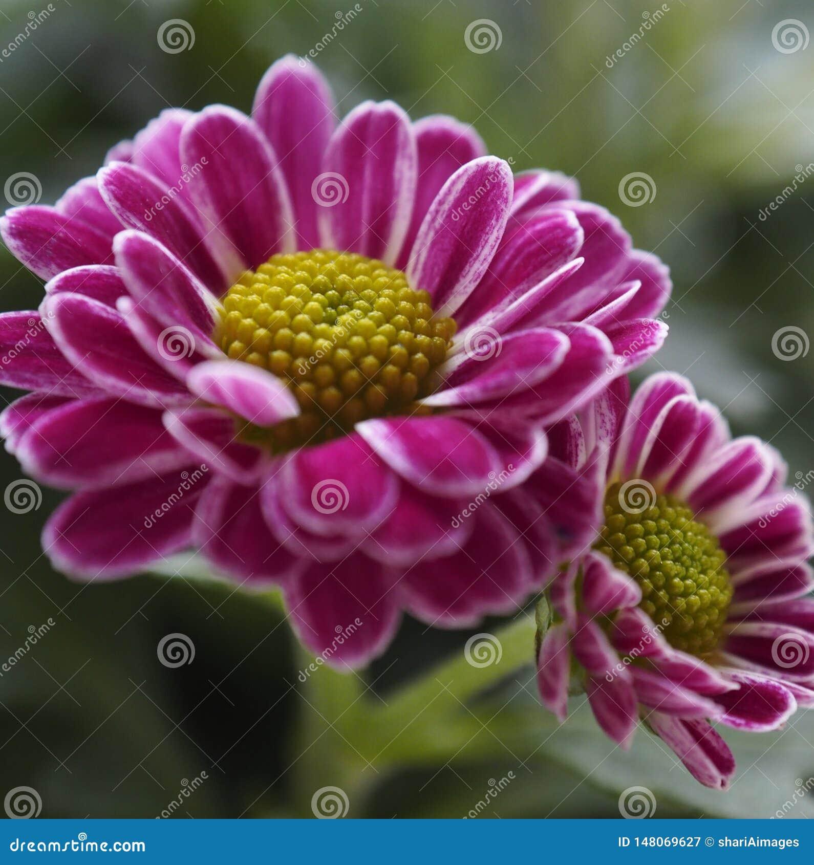 Kleine Roze en Witte Bloemen