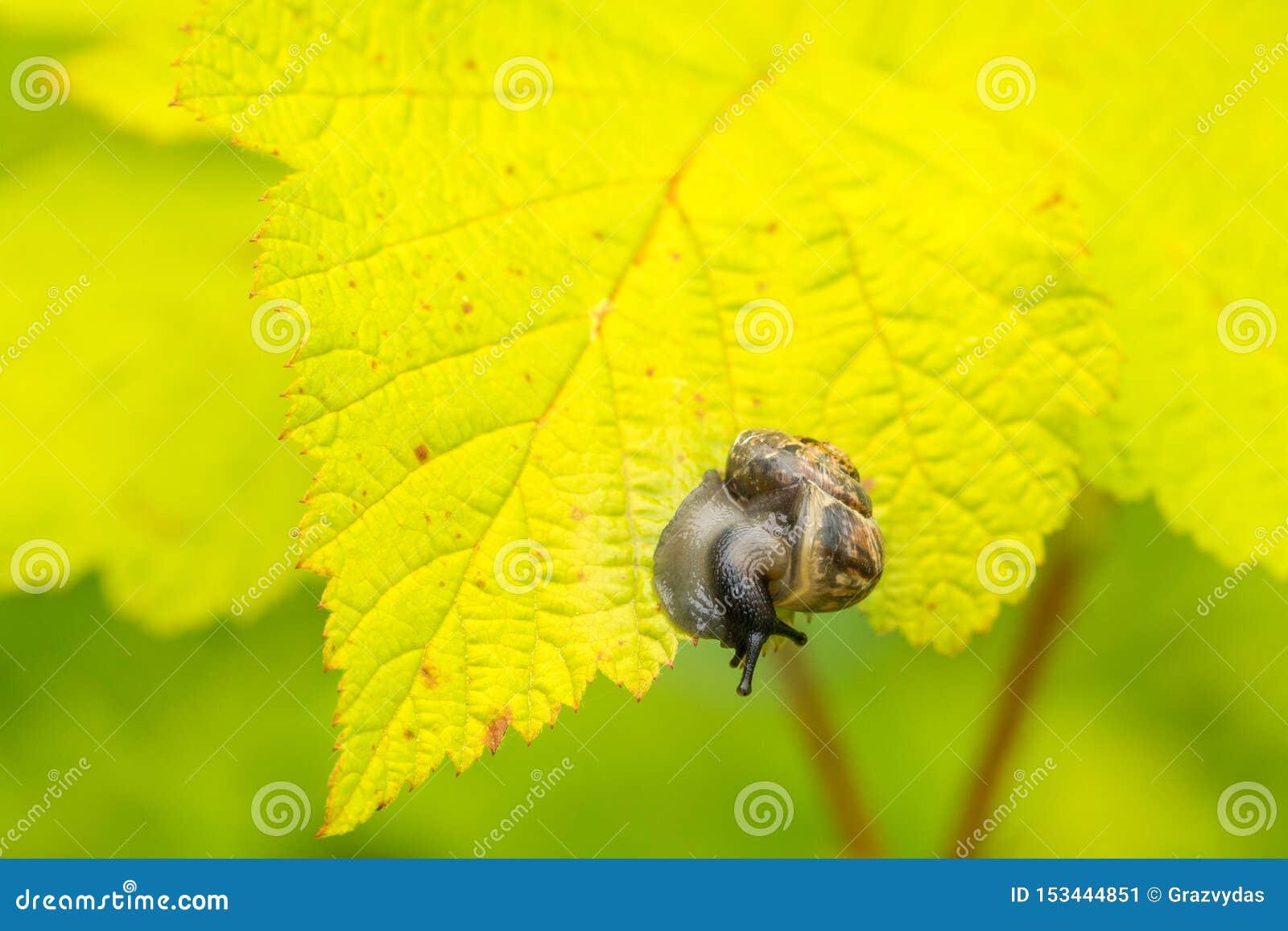 Kleine slak op het blad