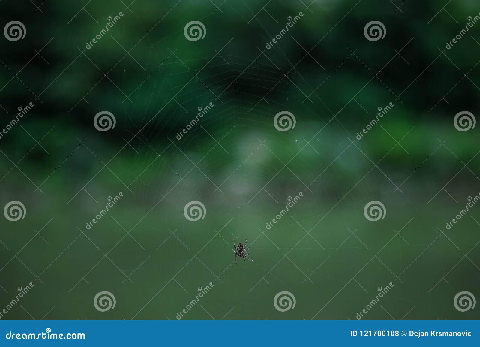 Kleine spin op netto