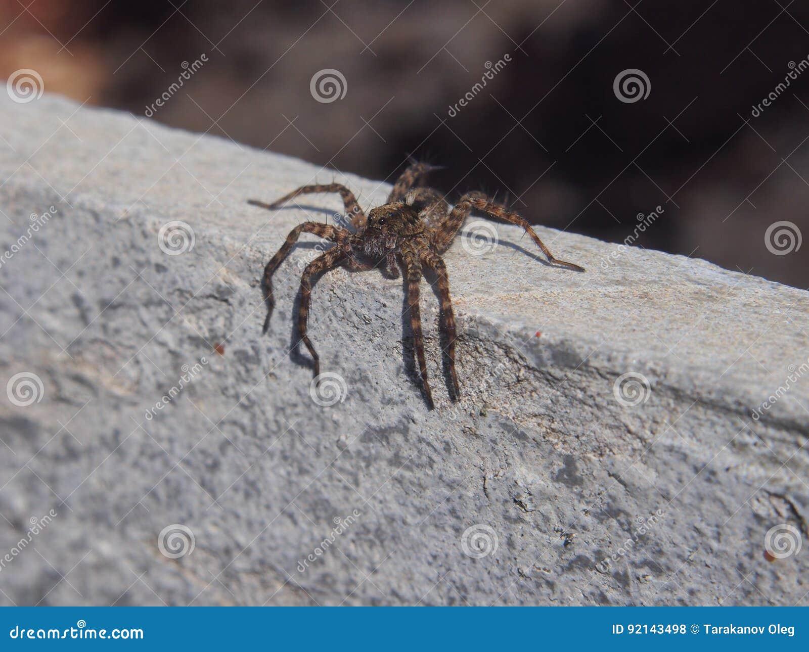 Kleine spinzitting op een rots geleedpotigen