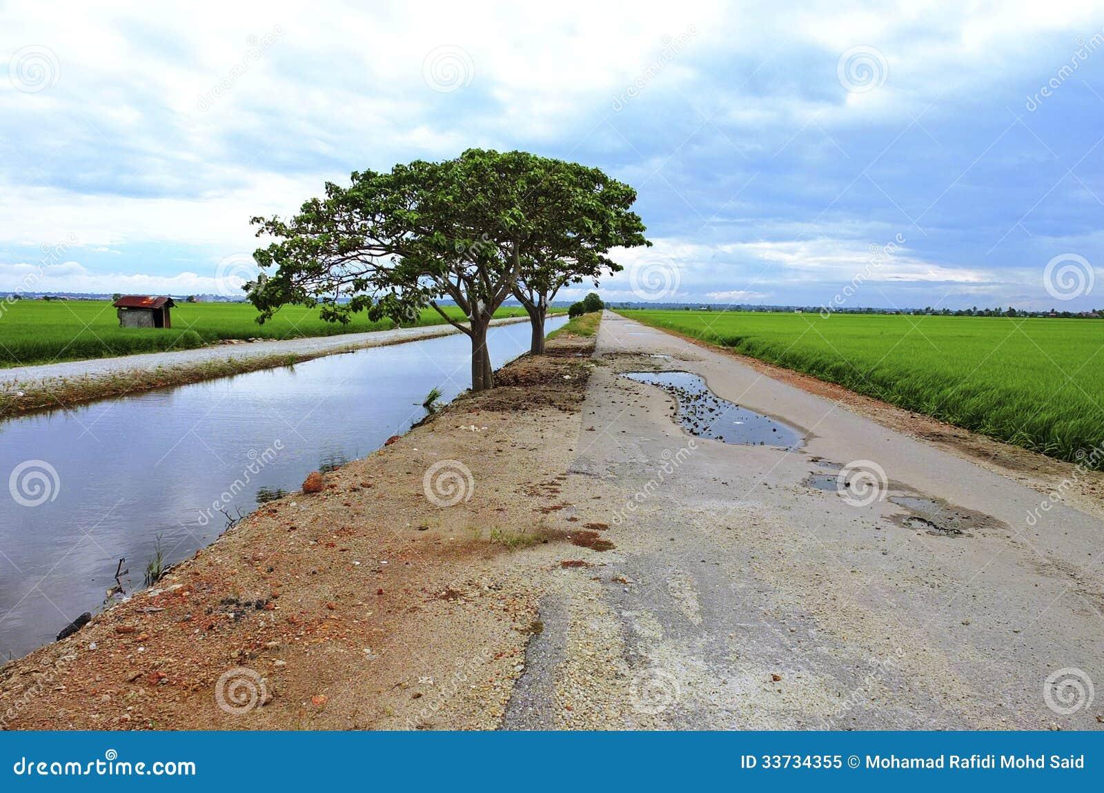 Kleine Straße am Reisfeld