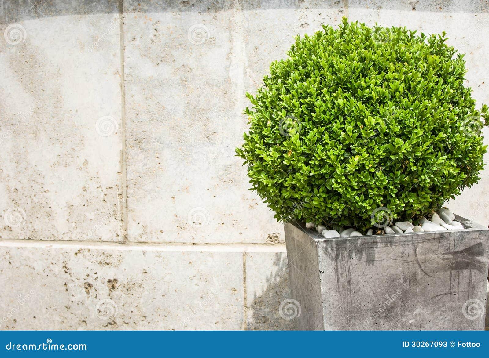 Kleine struik stock foto 39 s beeld 30267093 - Bush architectuur ...