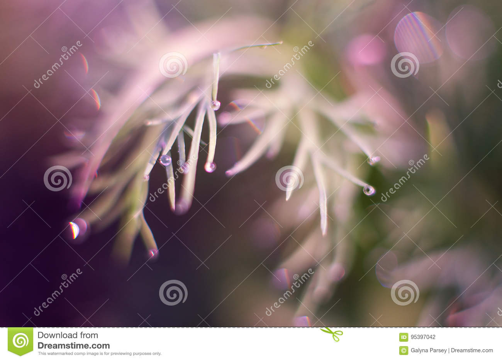 Kleine Tropfen des Taus auf frischem grünem Gras morgens