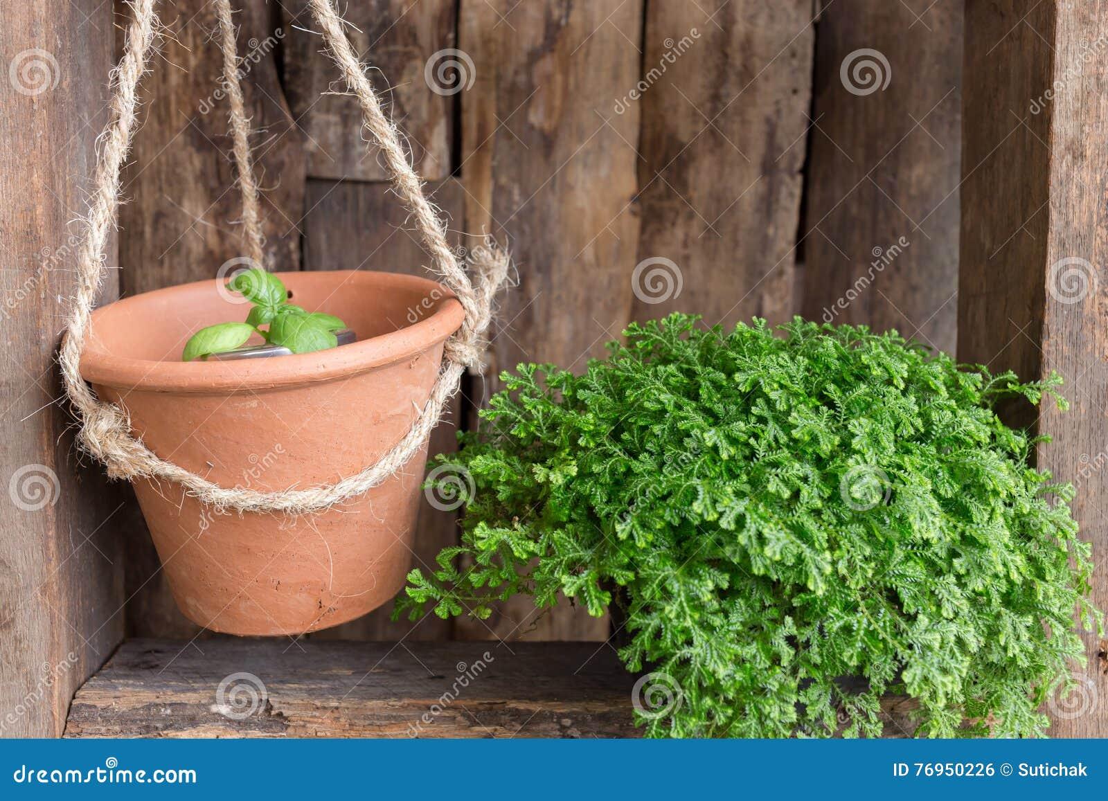 Kleine tuindecoratie stock foto. afbeelding bestaande uit ontwerp