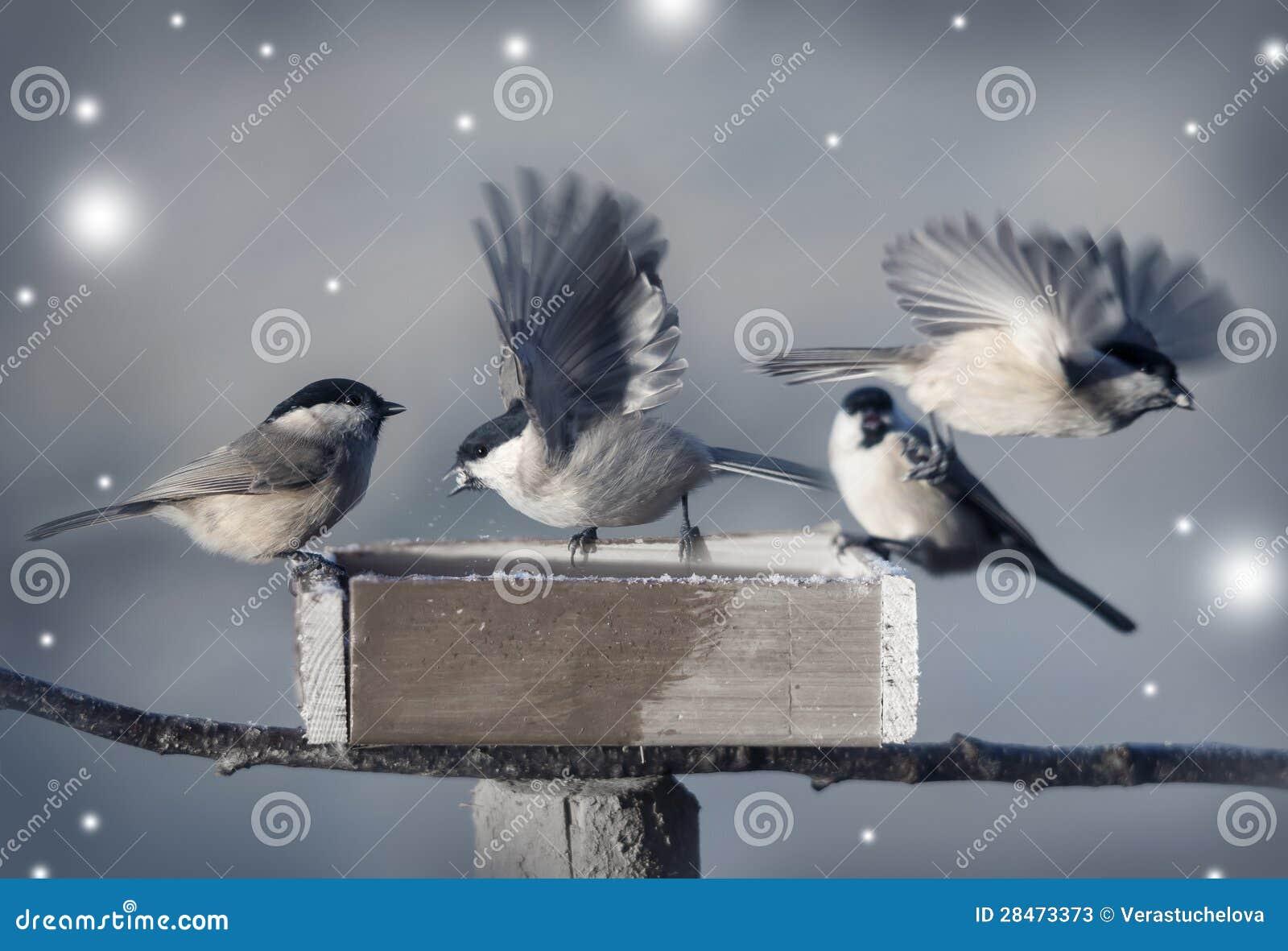Kleine Vögel im Winter