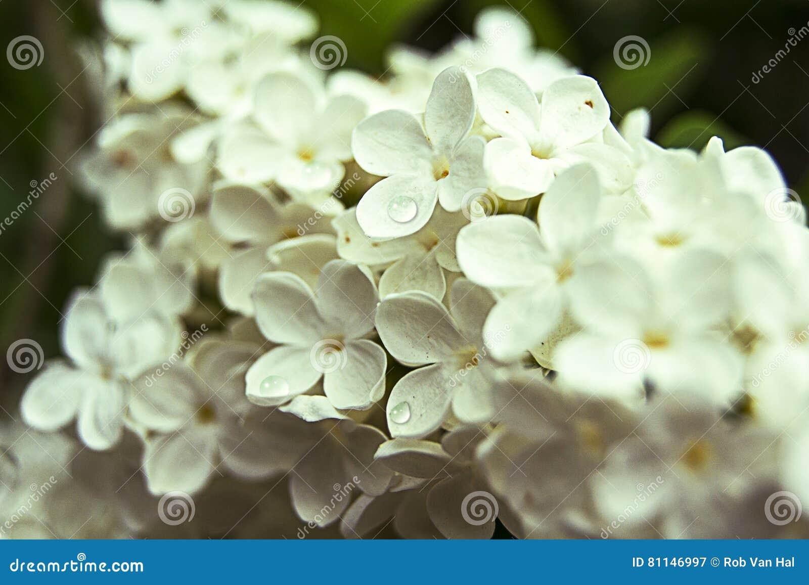 Kleine weiße Blüte