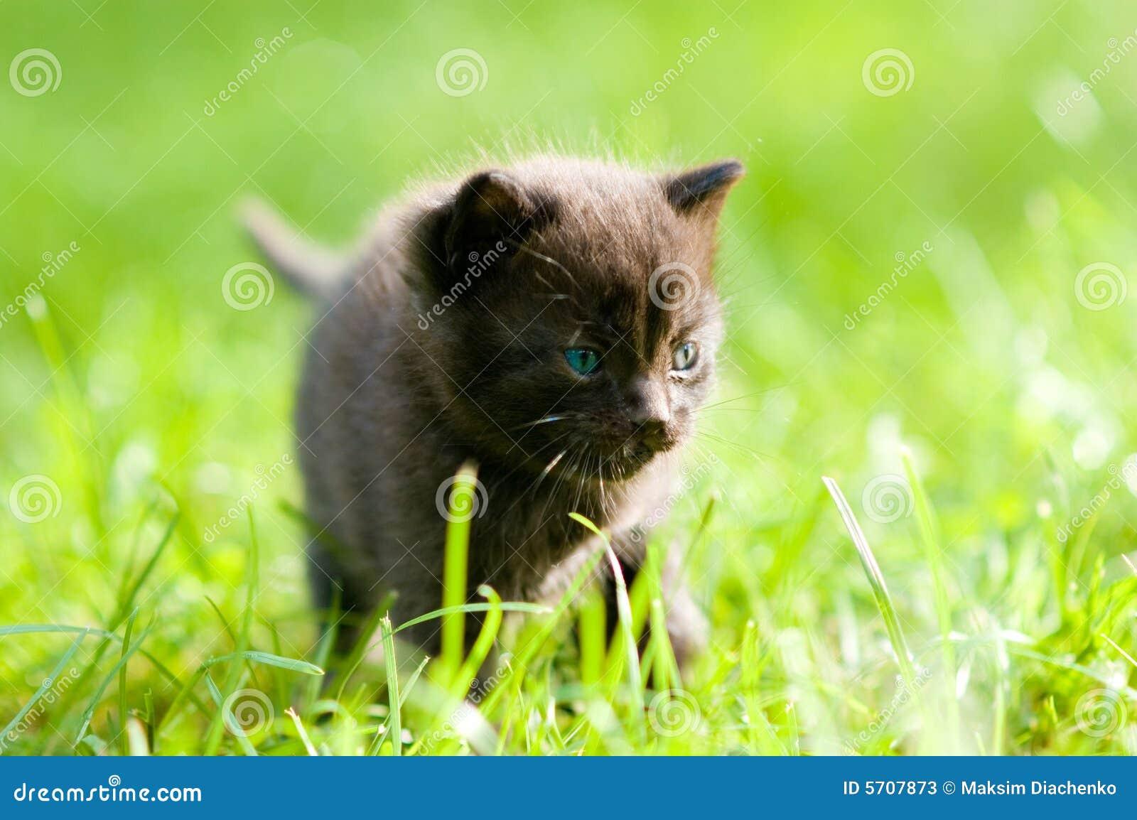 Kleine zwarte Pussys