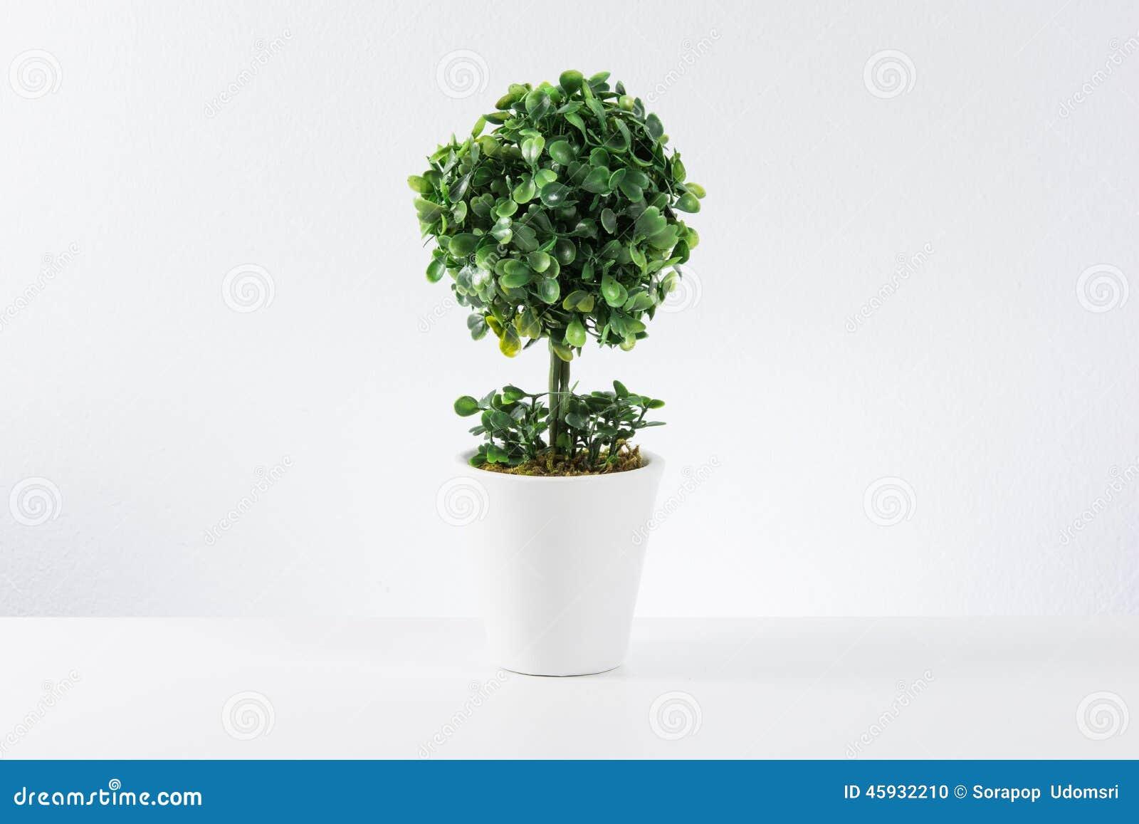 Kleiner Baum Im Weißen Topf Stockfoto