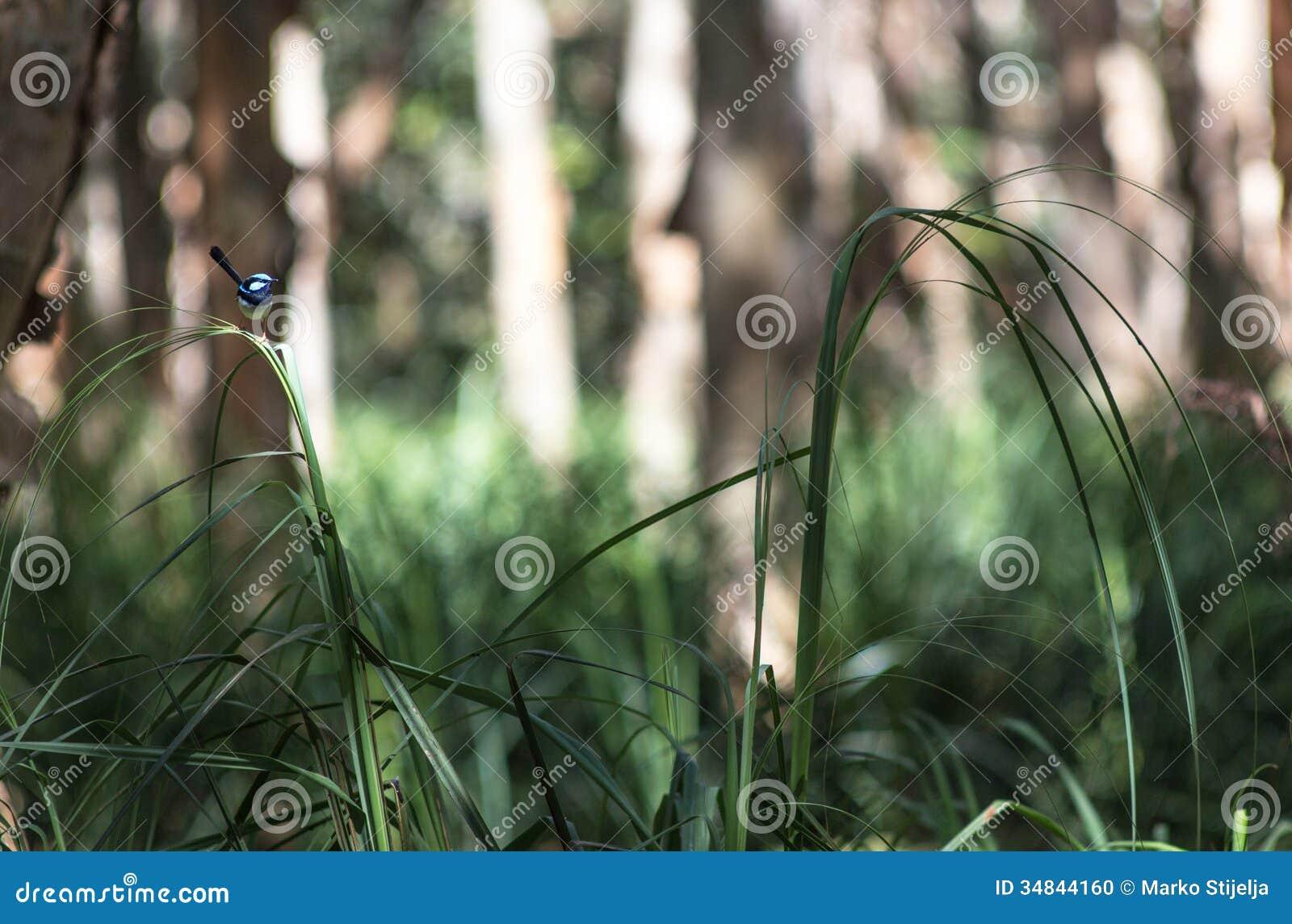 Kleiner blauer Vogel, der auf einem Grasblatt sitzt