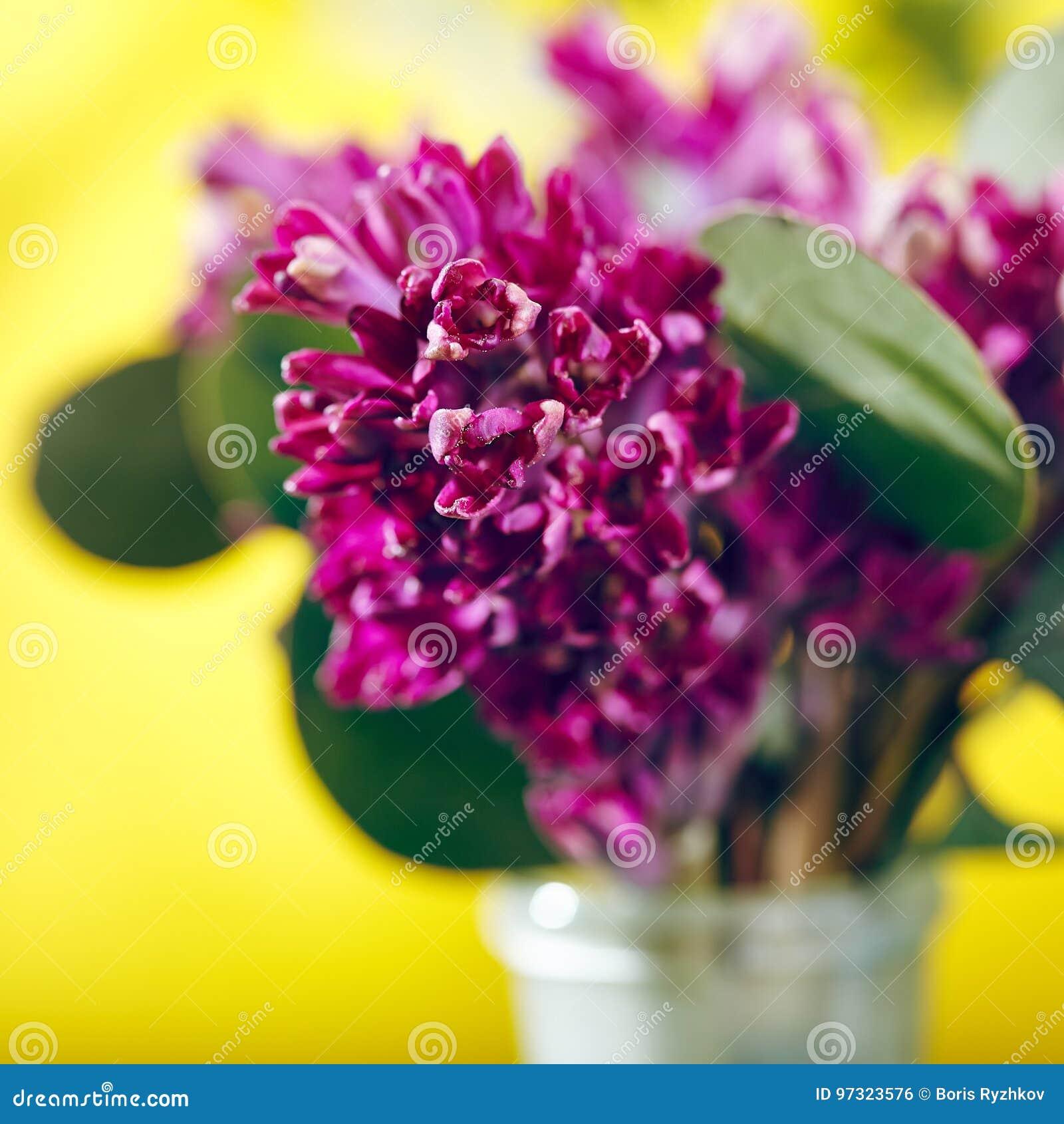 Kleiner Blumenstrauß der Blume