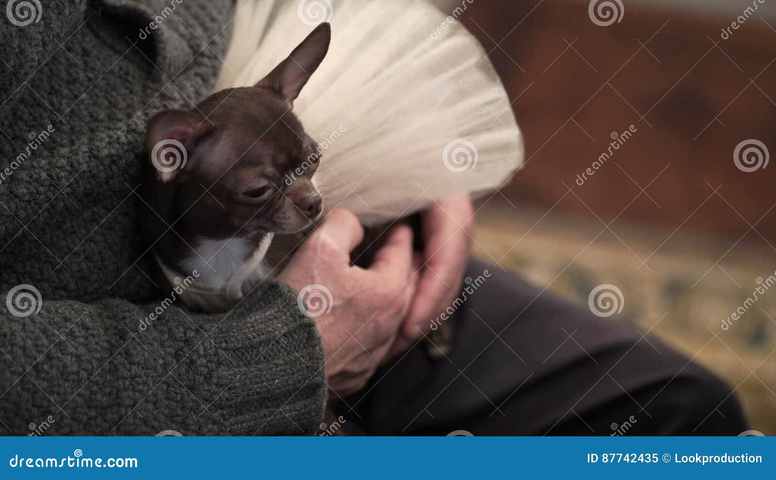 Ungewöhnlich Hund Im Hochzeitskleid Fotos - Brautkleider Ideen ...