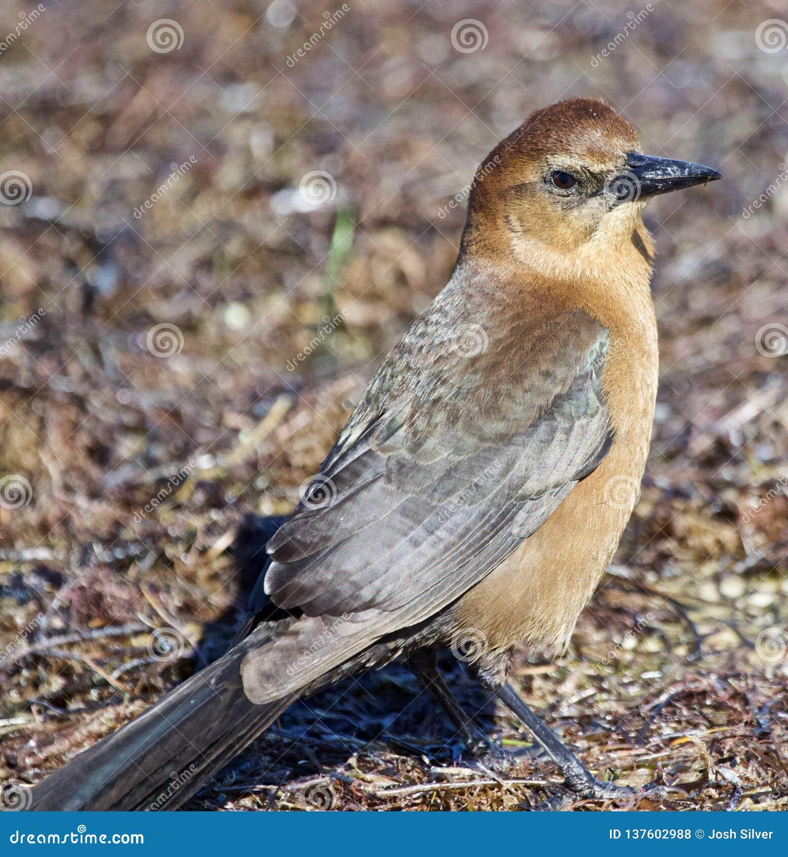 Kleiner brauner Vogel