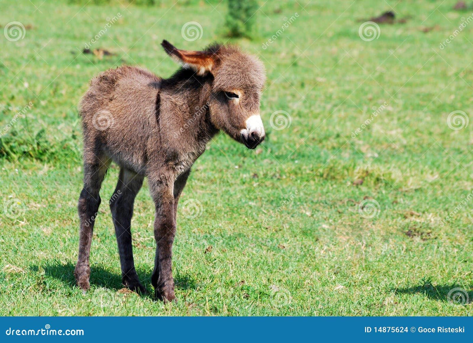 Kieferknochen auf einem Esel
