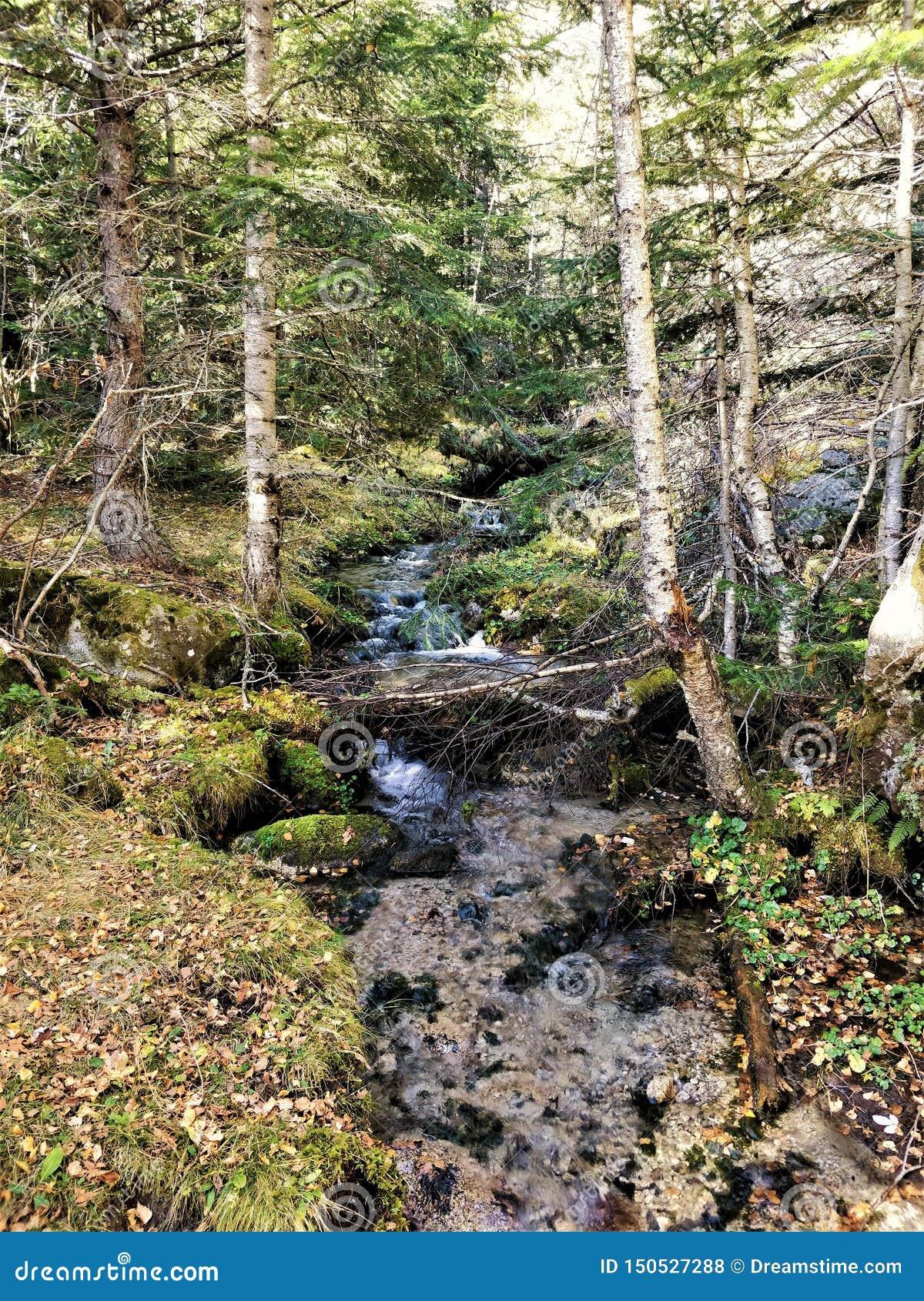 Kleiner Fluss unter dem Wald voll des Lebens